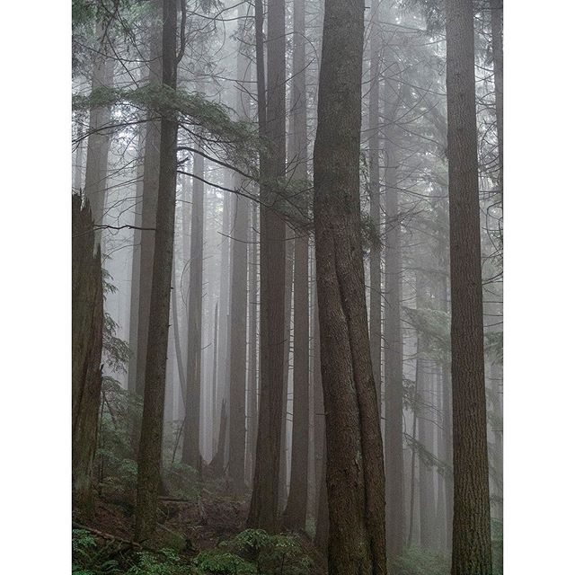 The best time to hike is on a misty, rainfall day.  1) Because you will have the trail pretty much to yourself.  2) The lack of sun and less chance of overheating.  3) The picture opportunities, beautiful green forest and foggy clouds.