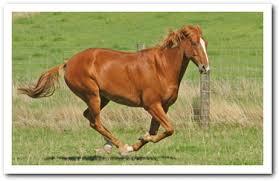 Gottteshorse