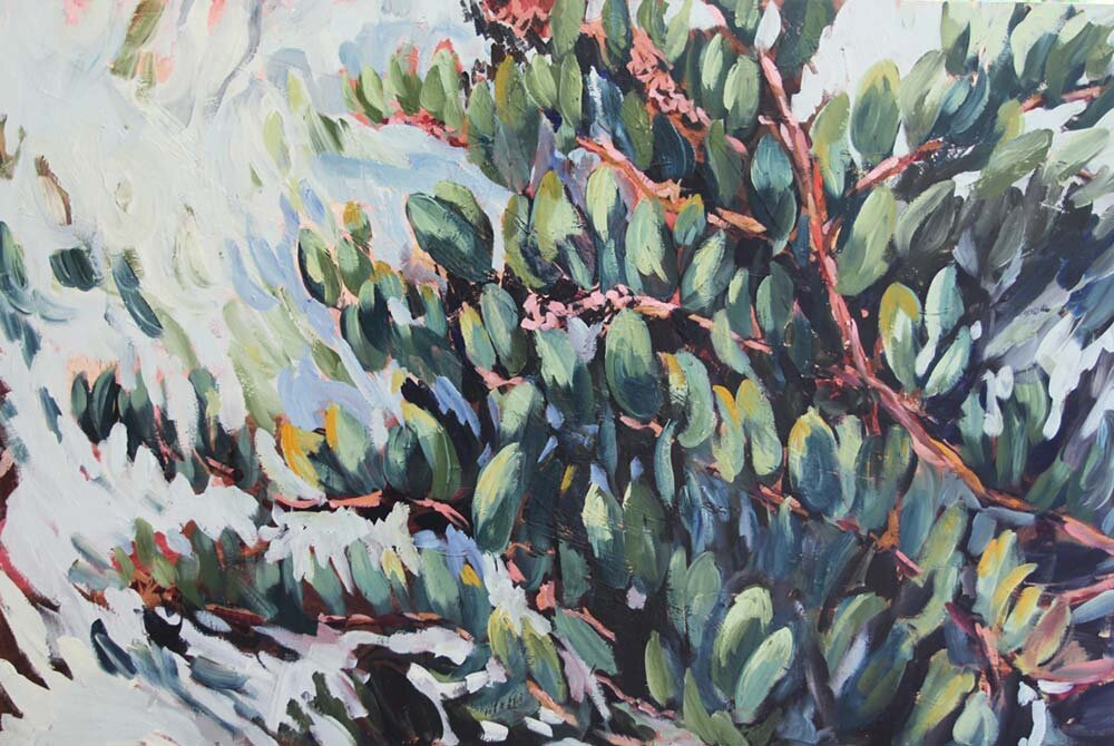 """California native plant studies - Studying my hyper-local ecology and ecosystems through California native plants. These paintings are individual portraits of the plants as if to say """"nice to meet you!""""."""
