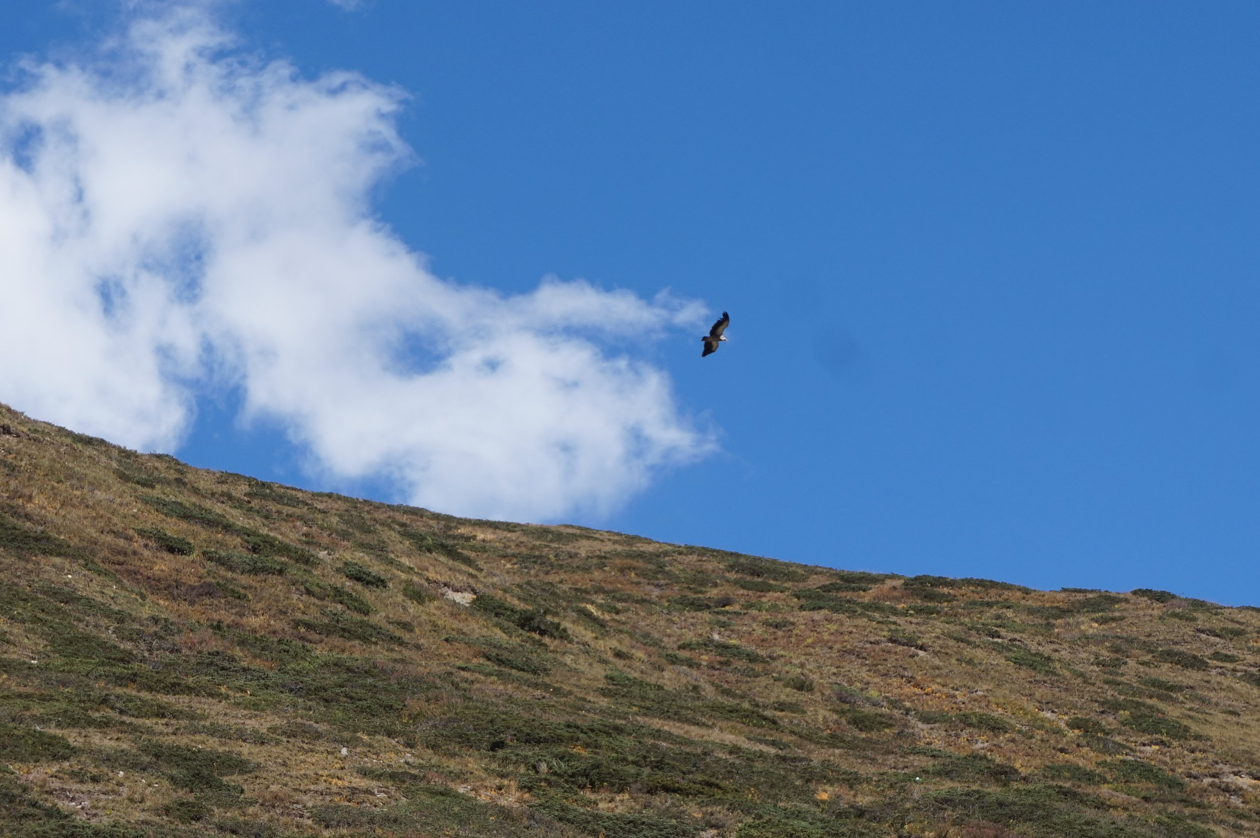 ... and eagles and bearded vultures soar overhead ...
