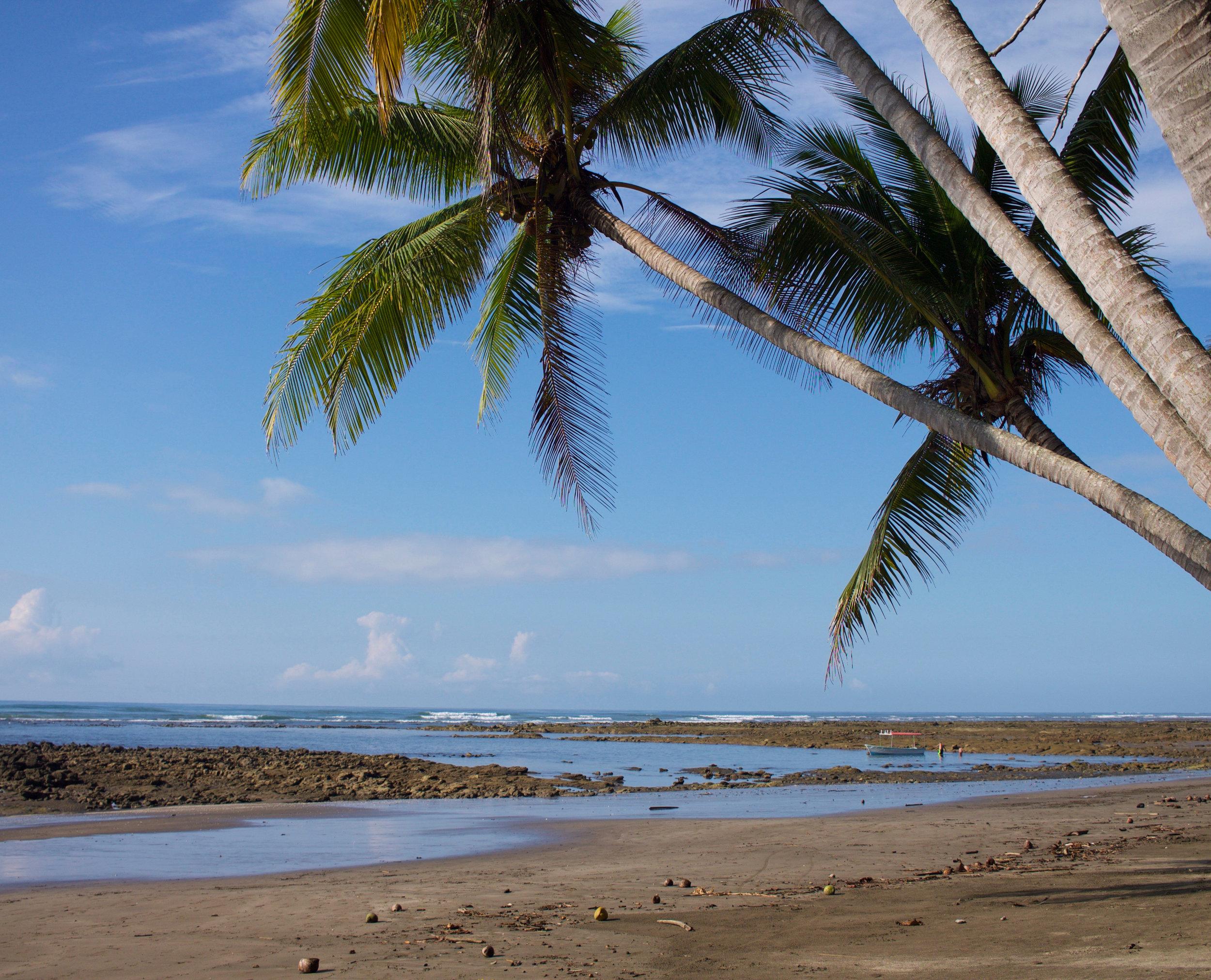 Enero en Costa Rica - Monteverde, Santa Teresa y Playa Esterillos