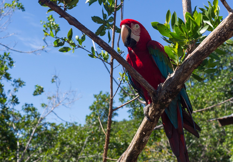 Febrero en Costa Rica - Nosara, Rincón de la Vieja, Bocas del Toro y Dominical