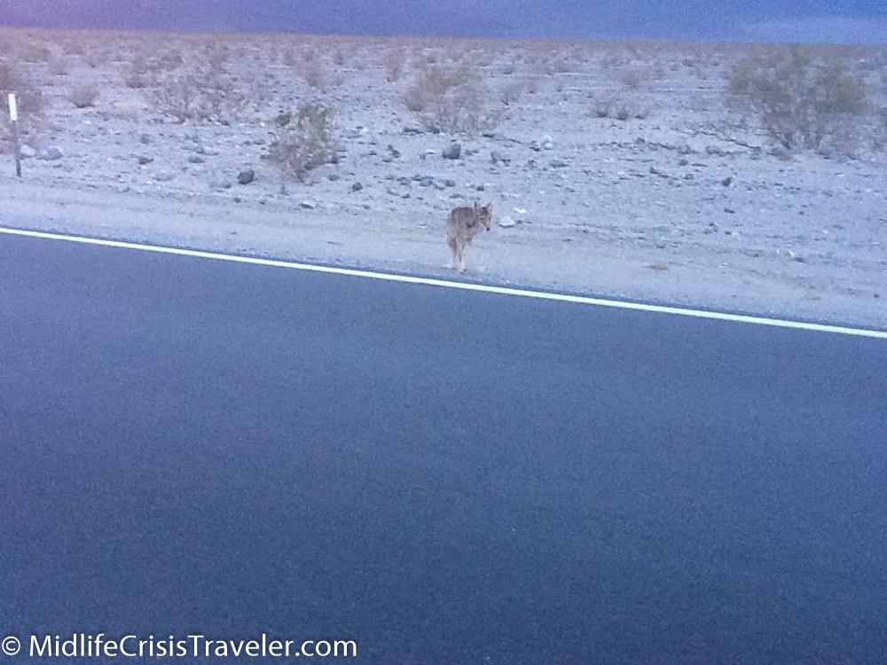 Death Valley 2016-5.jpg