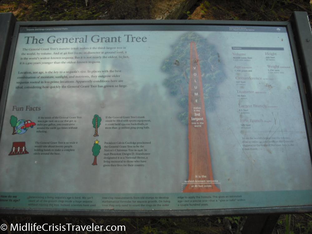 Sequoia-26.jpg