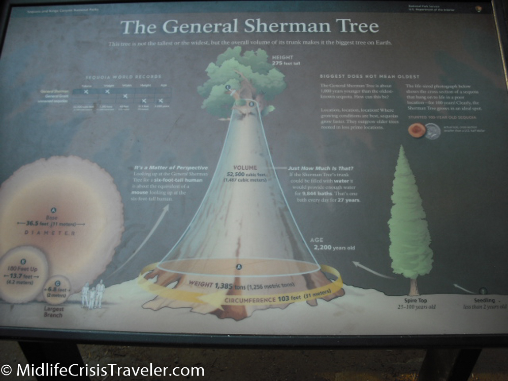 Sequoia-42.jpg