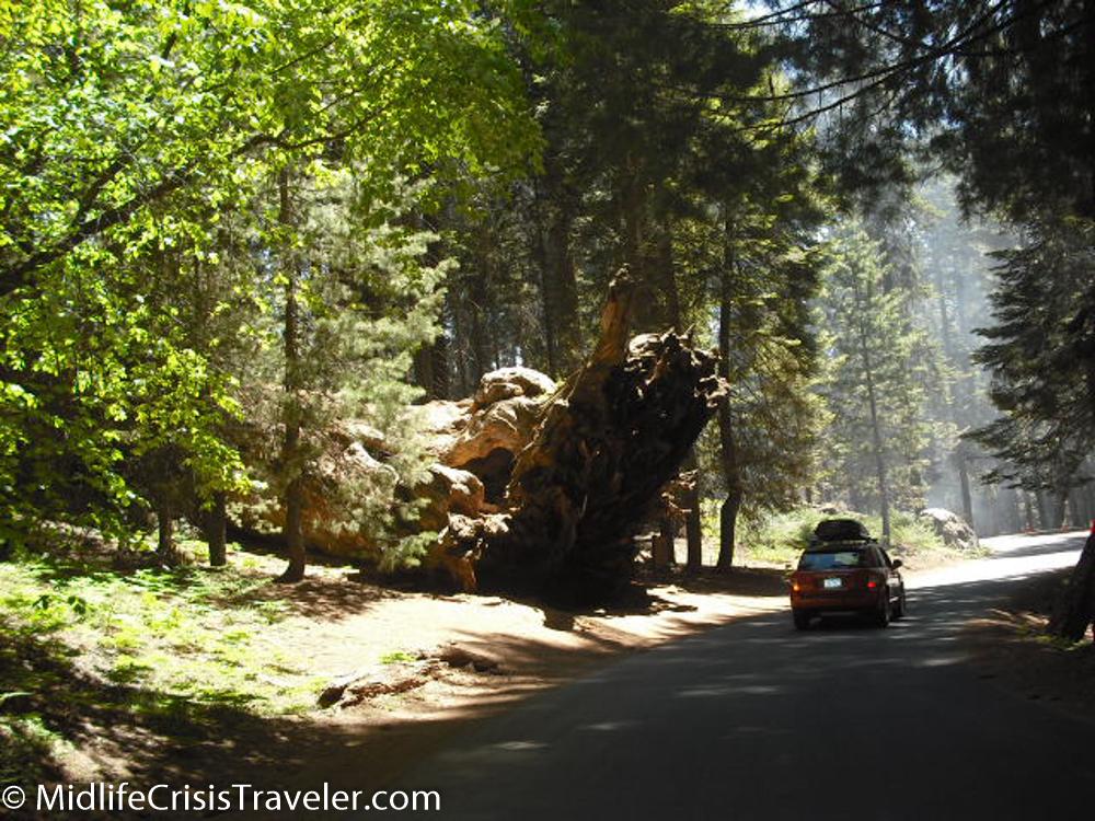 Sequoia-4.jpg