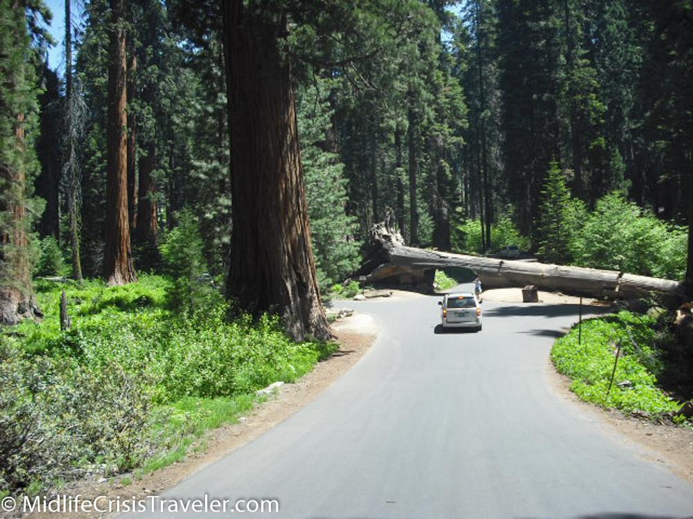 Sequoia-5.jpg