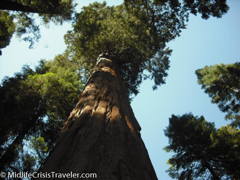 Sequoia-27.jpg