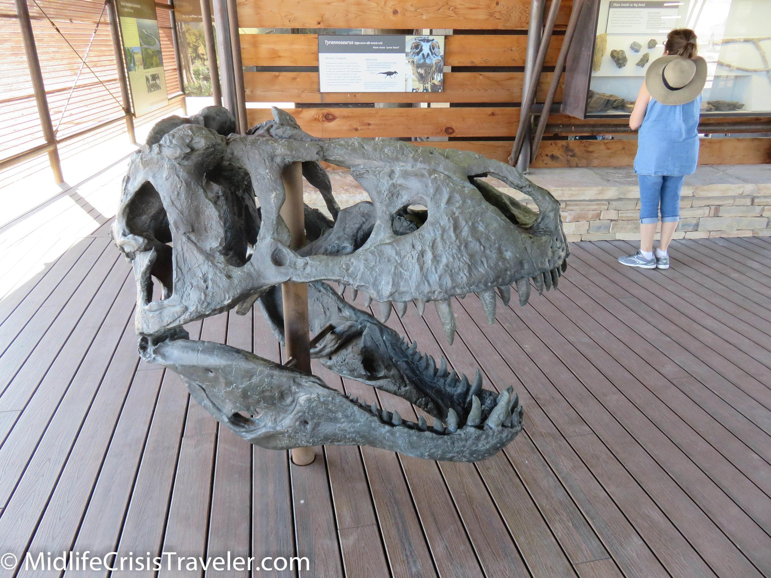 Big Bend Fossils-16.jpg