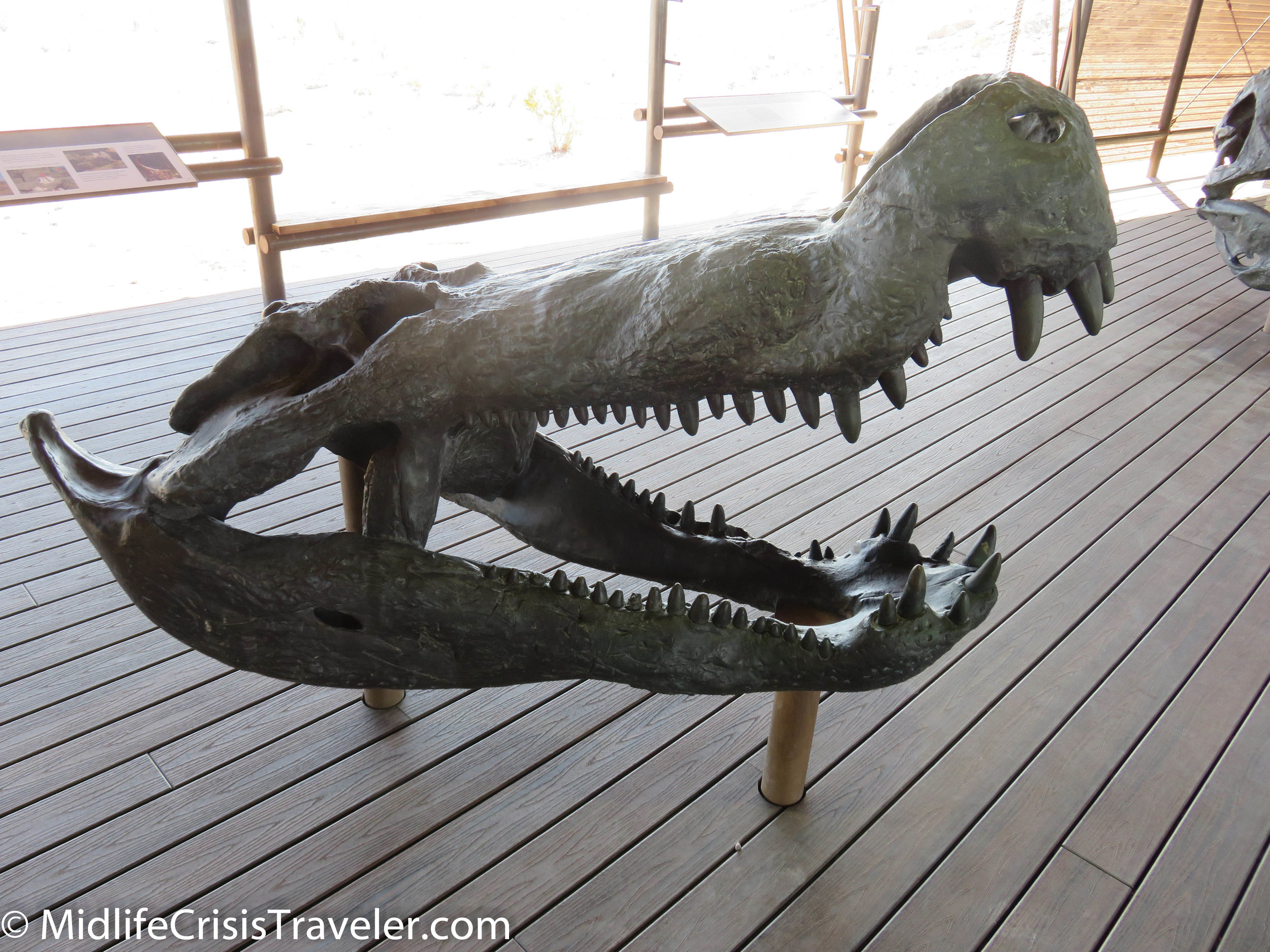 Big Bend Fossils-13.jpg