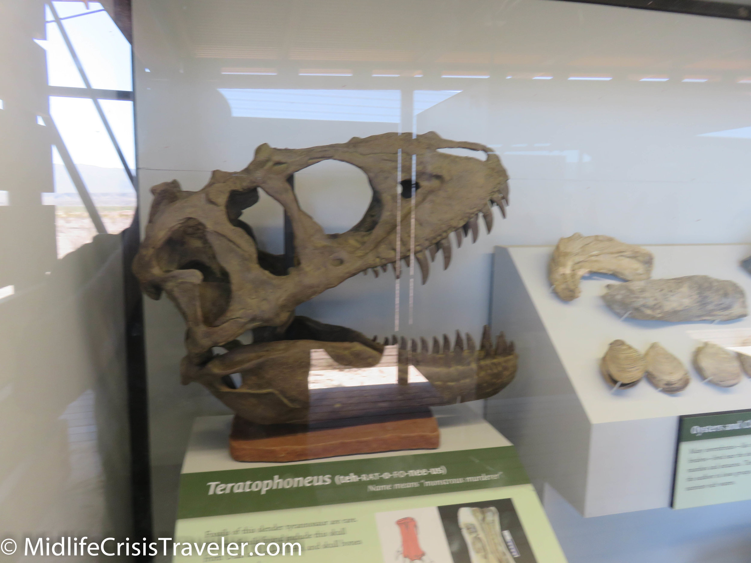 Big Bend Fossils-12.jpg