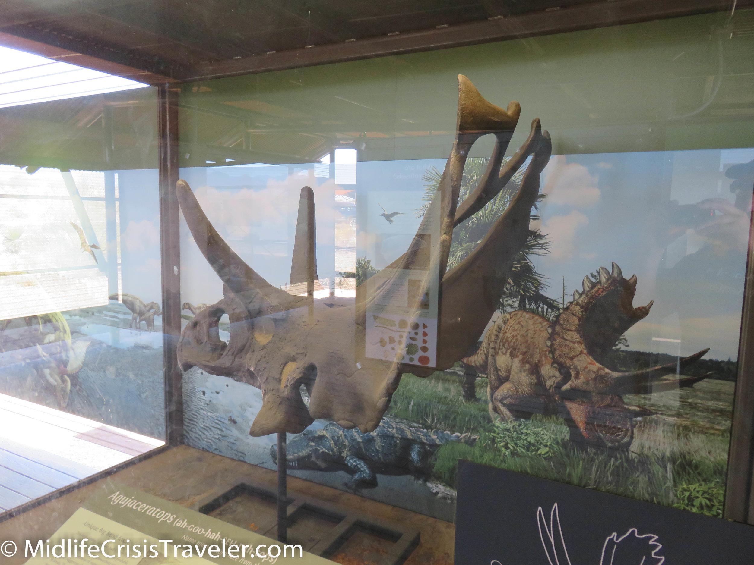 Big Bend Fossils-8.jpg