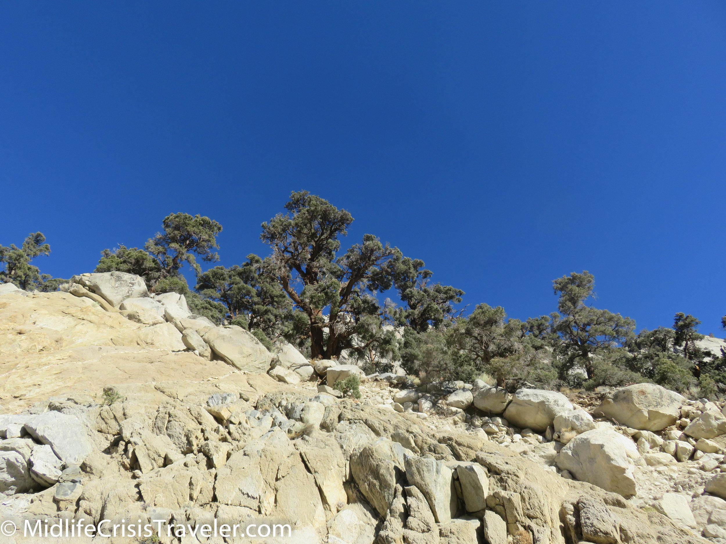 Lone Pine-40.jpg