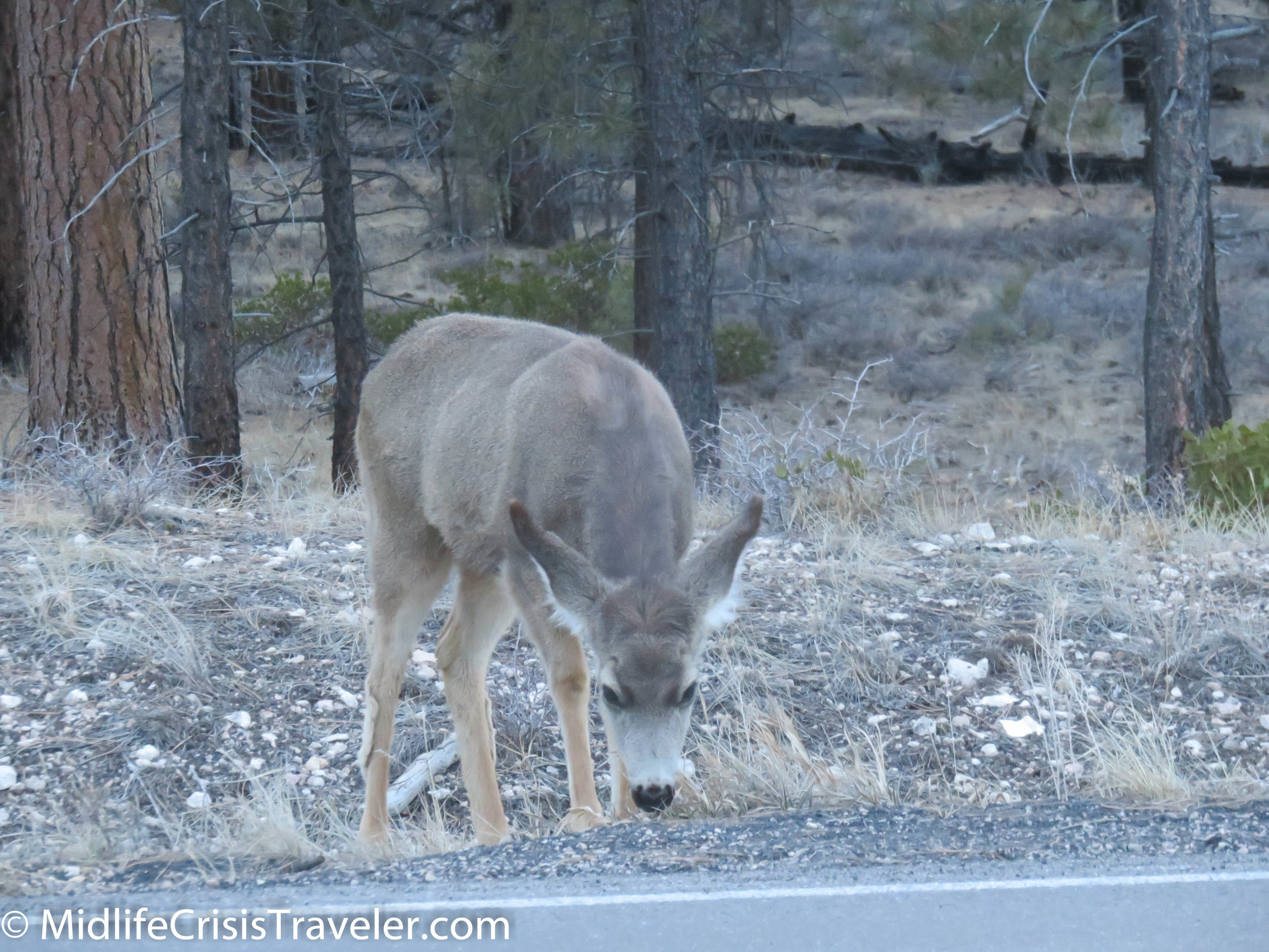 Bryce Canyon NP-184.jpg