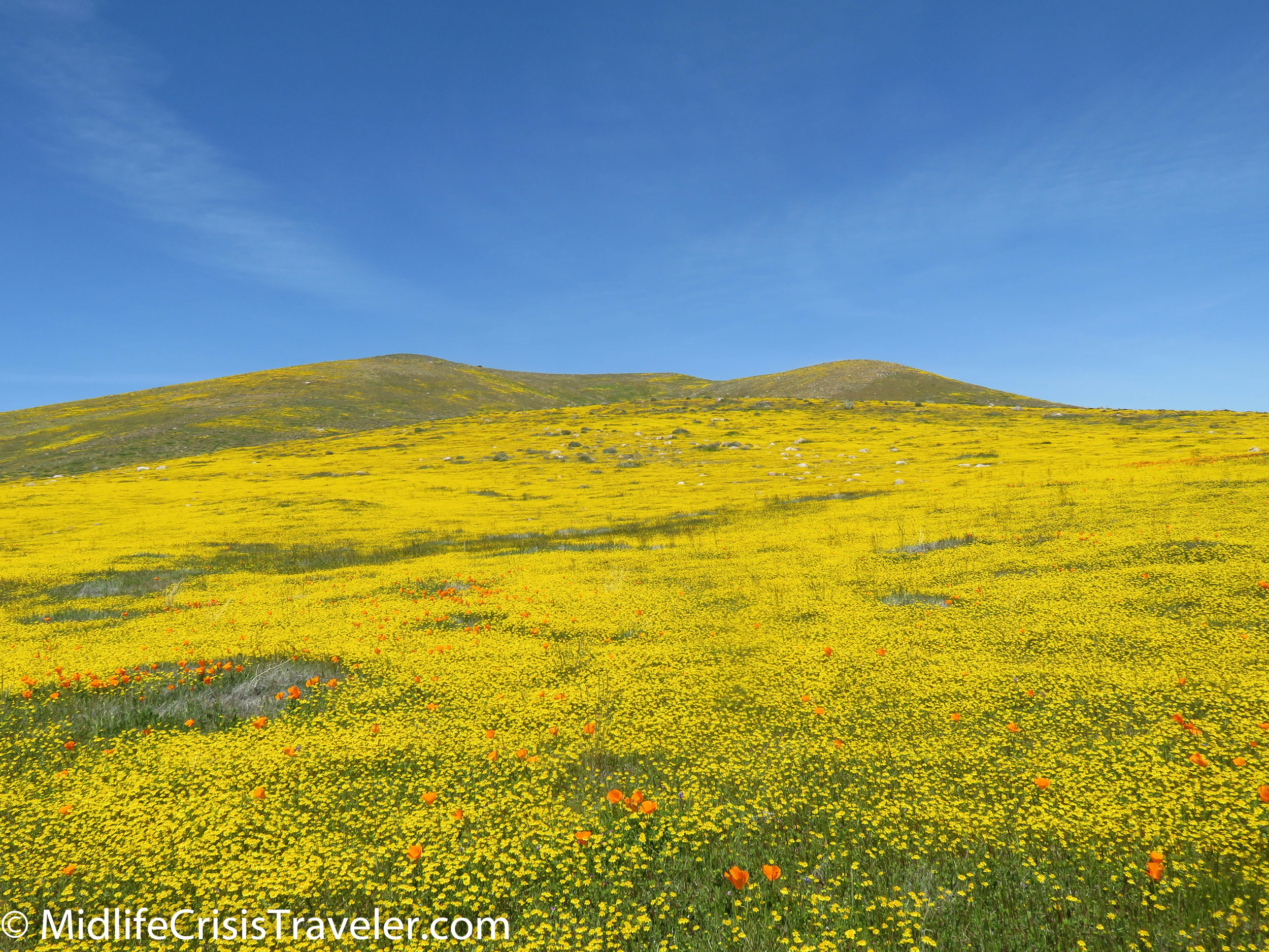 2019 Super Bloom-115.jpg
