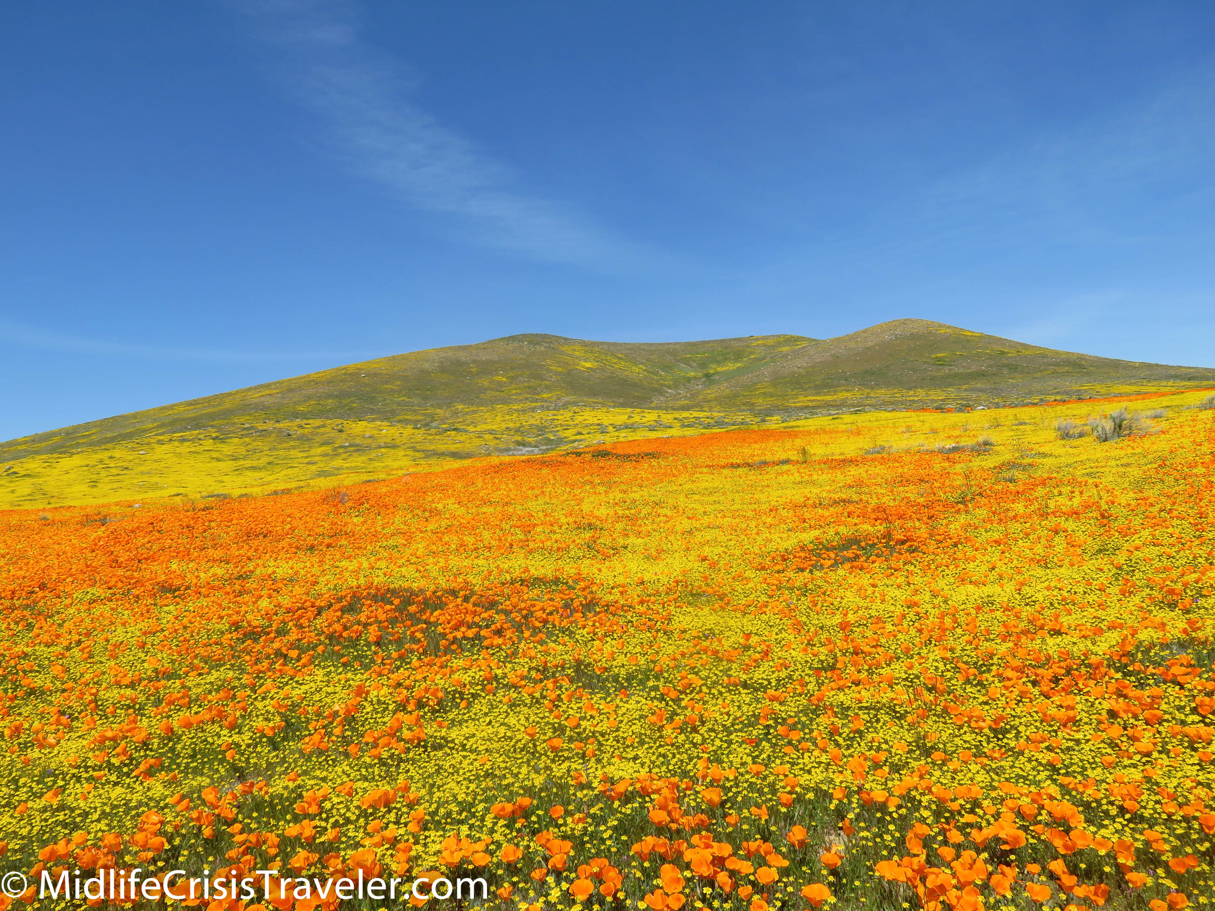2019 Super Bloom-113.jpg
