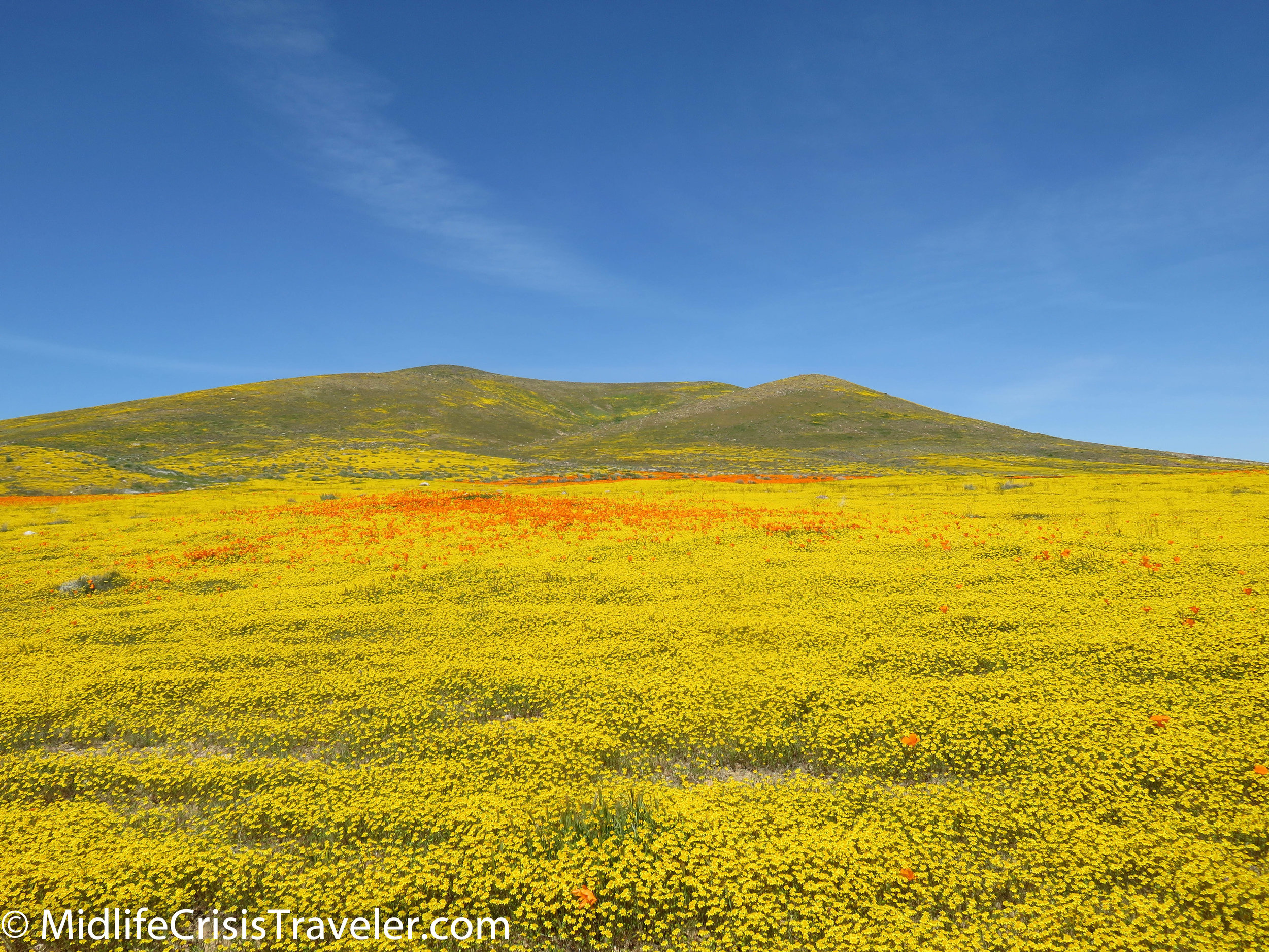 2019 Super Bloom-112.jpg