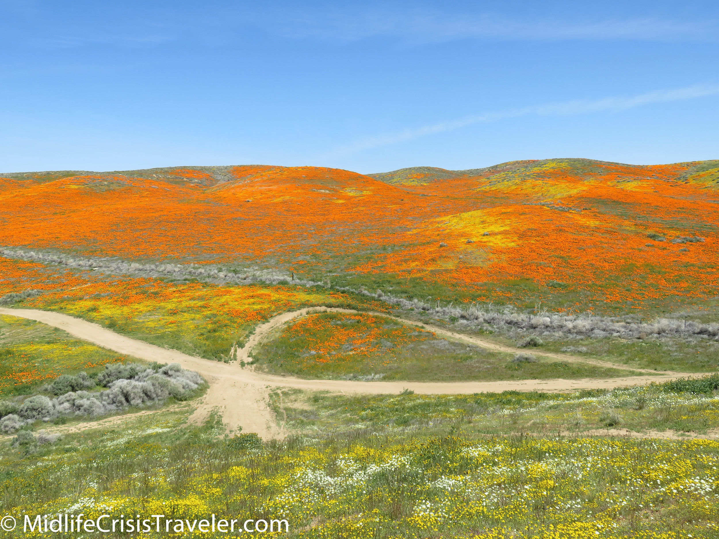 2019 Super Bloom-107.jpg