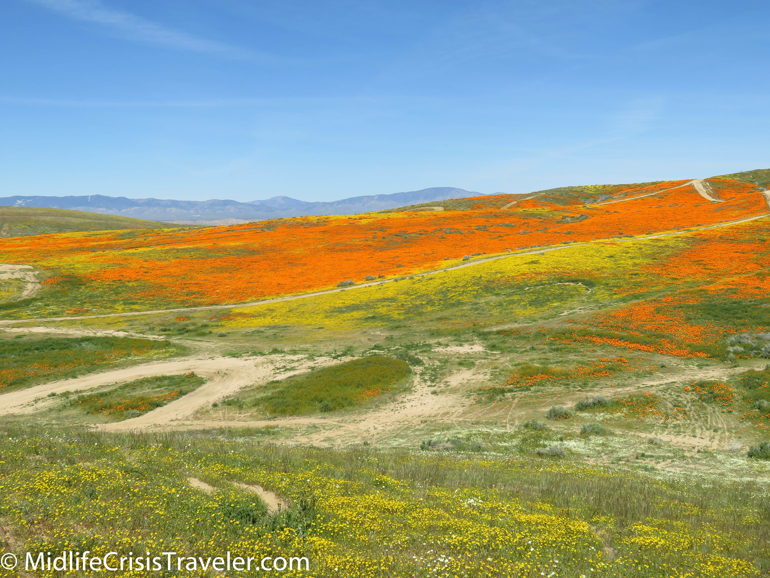 2019 Super Bloom-105.jpg