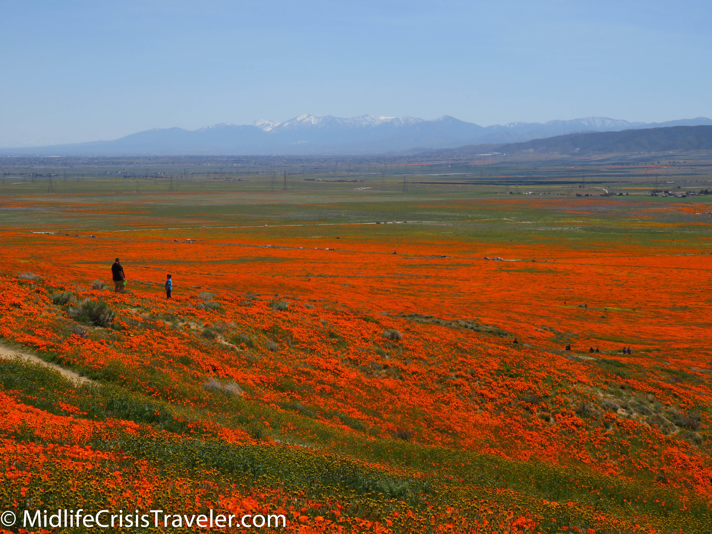 2019 Super Bloom-101.jpg