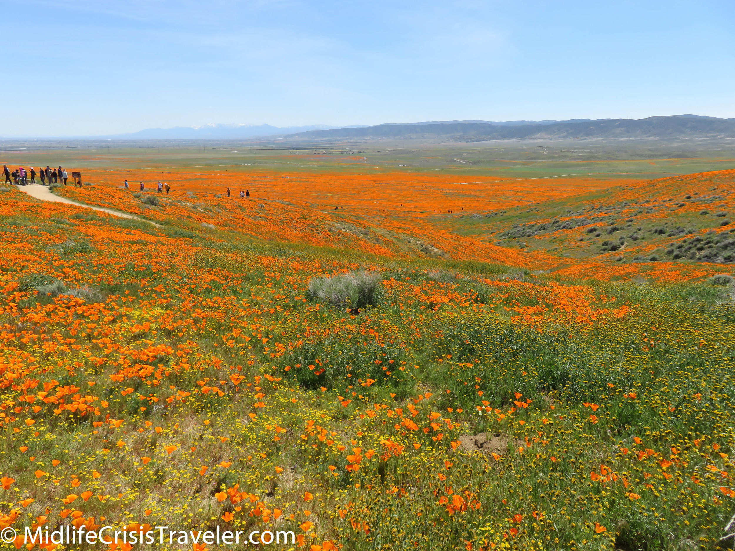 2019 Super Bloom-99.jpg
