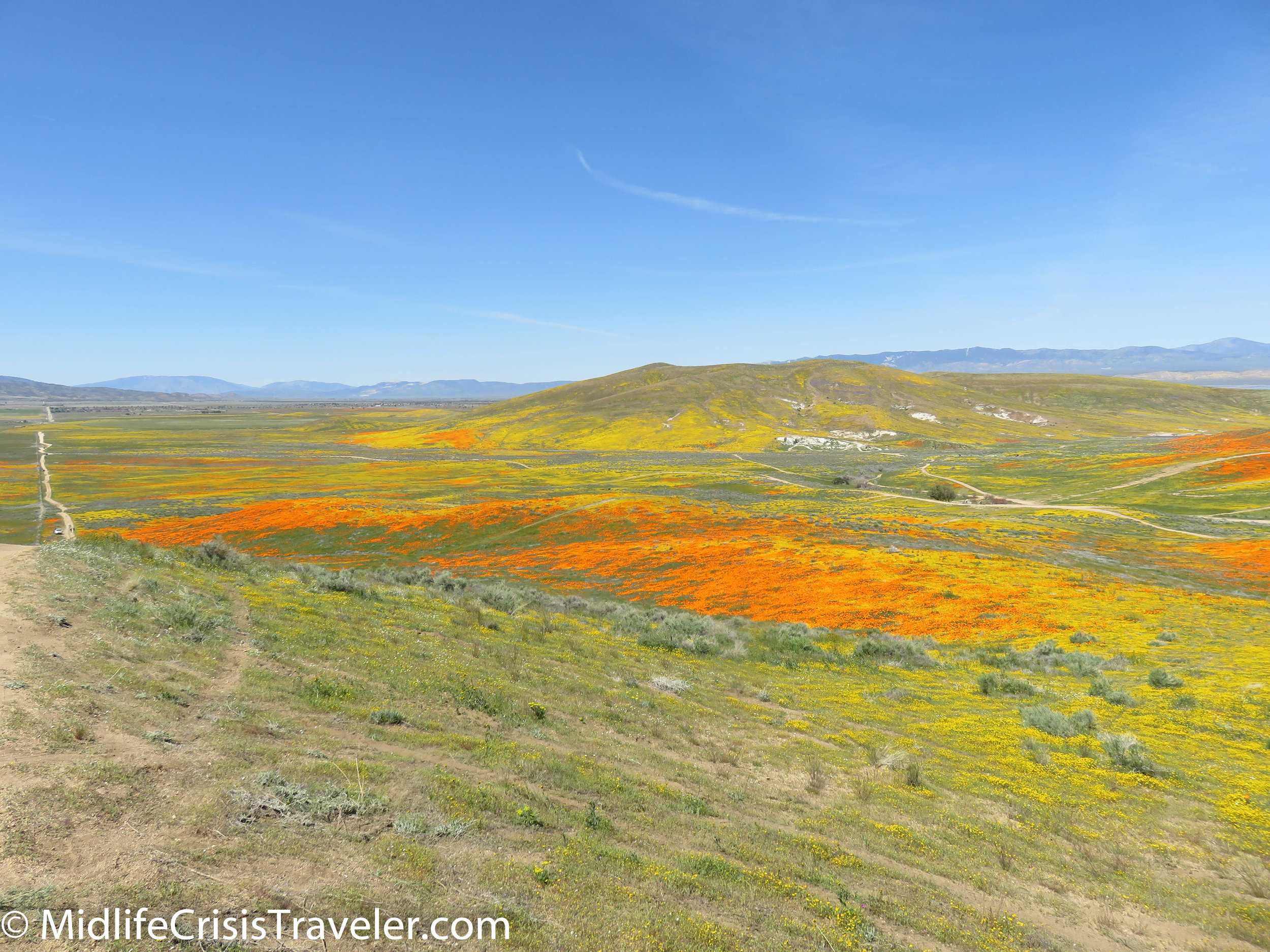 2019 Super Bloom-92.jpg