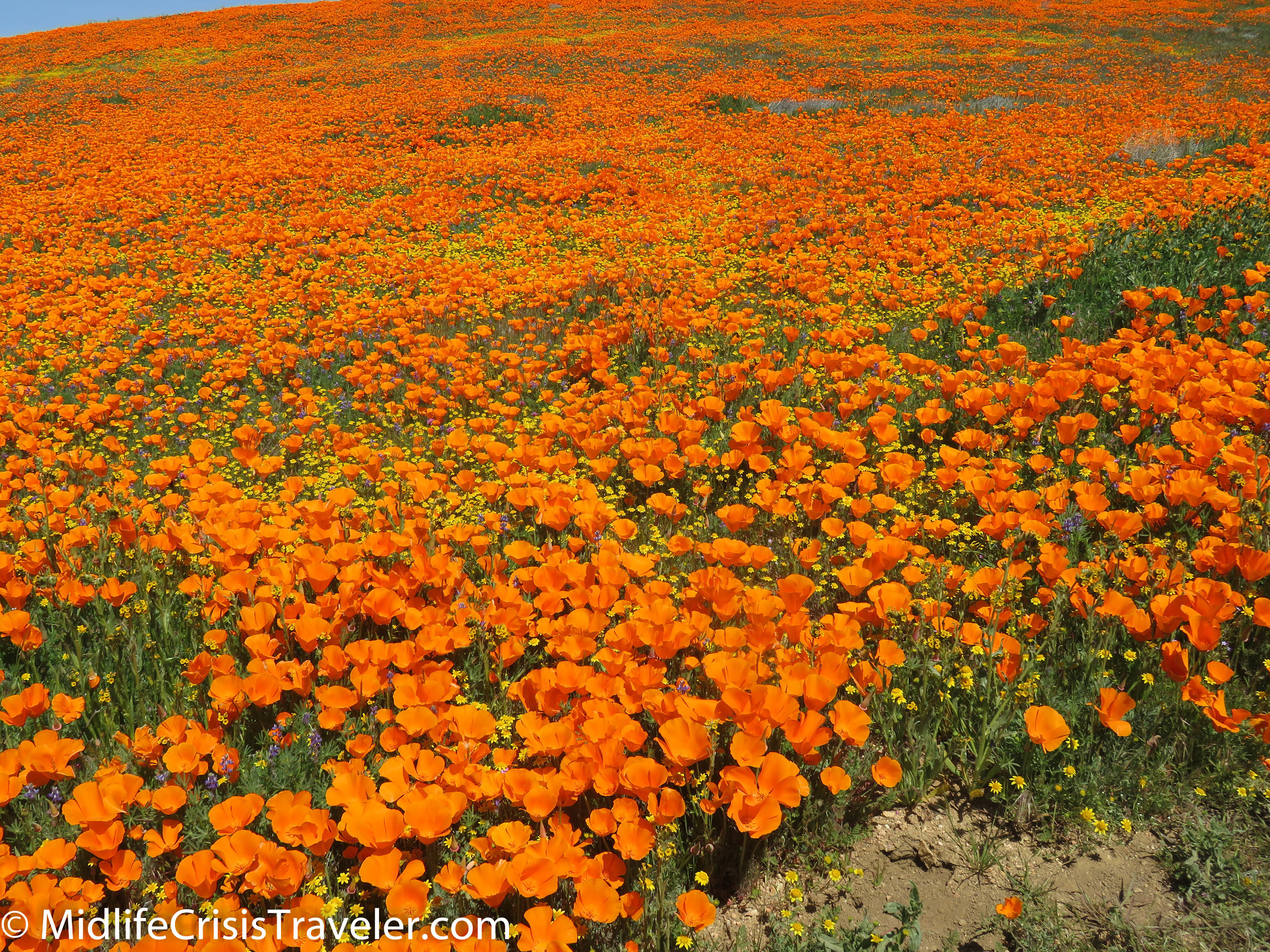 2019 Super Bloom-87.jpg