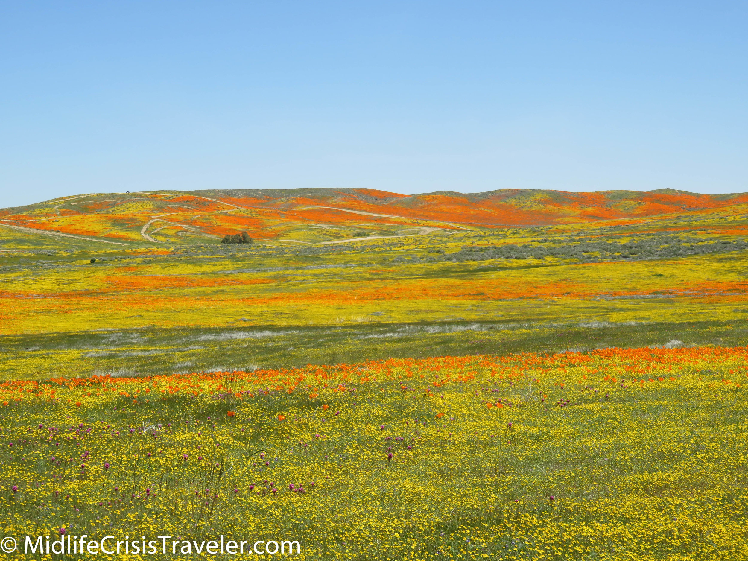 2019 Super Bloom-76.jpg