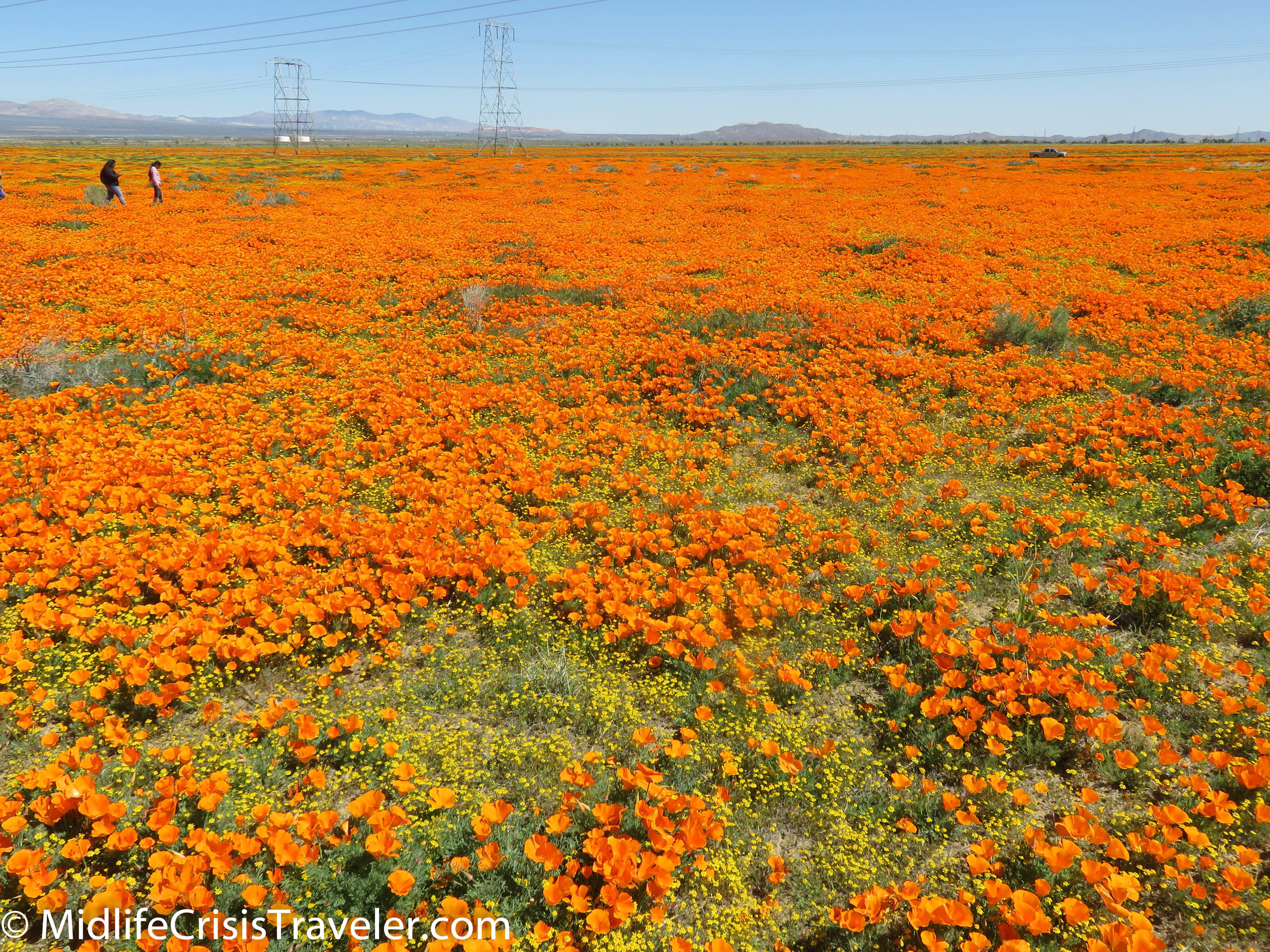 2019 Super Bloom-35.jpg