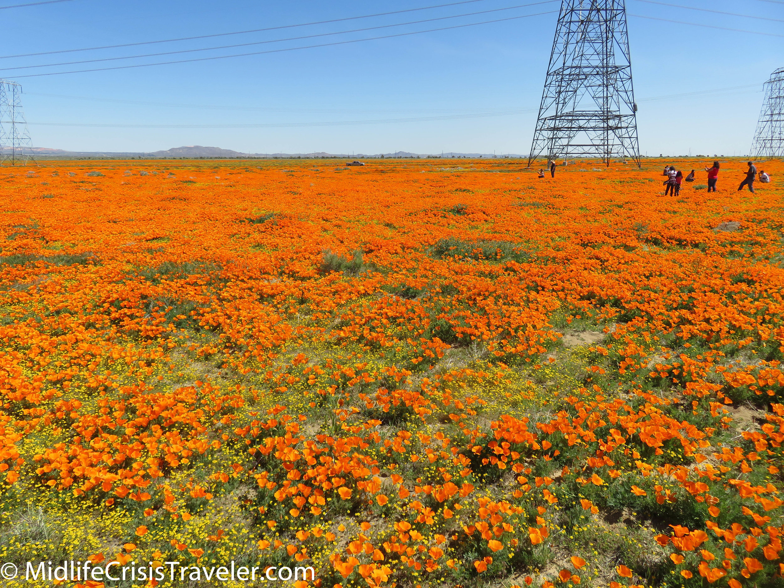 2019 Super Bloom-34.jpg