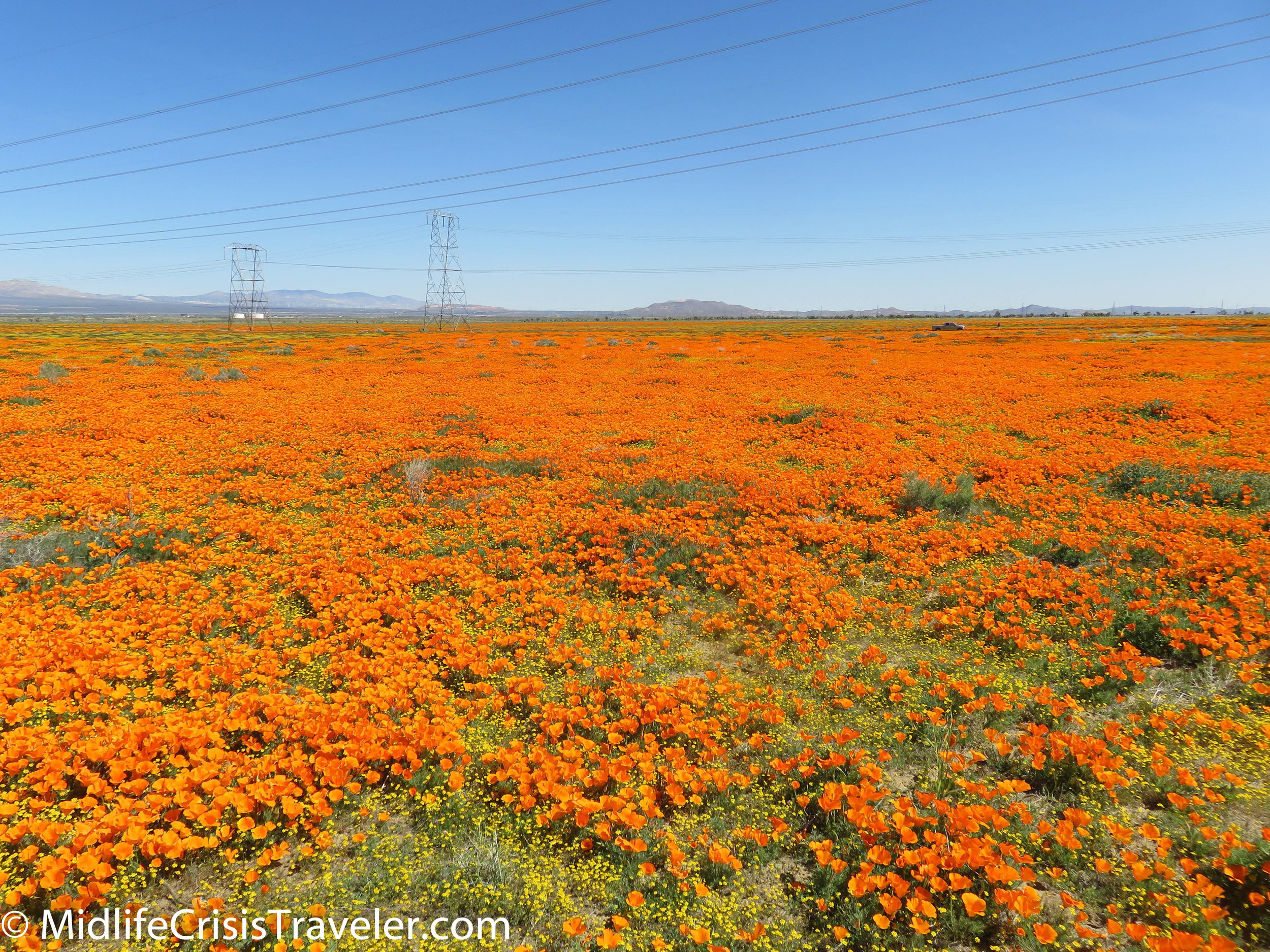 2019 Super Bloom-33.jpg