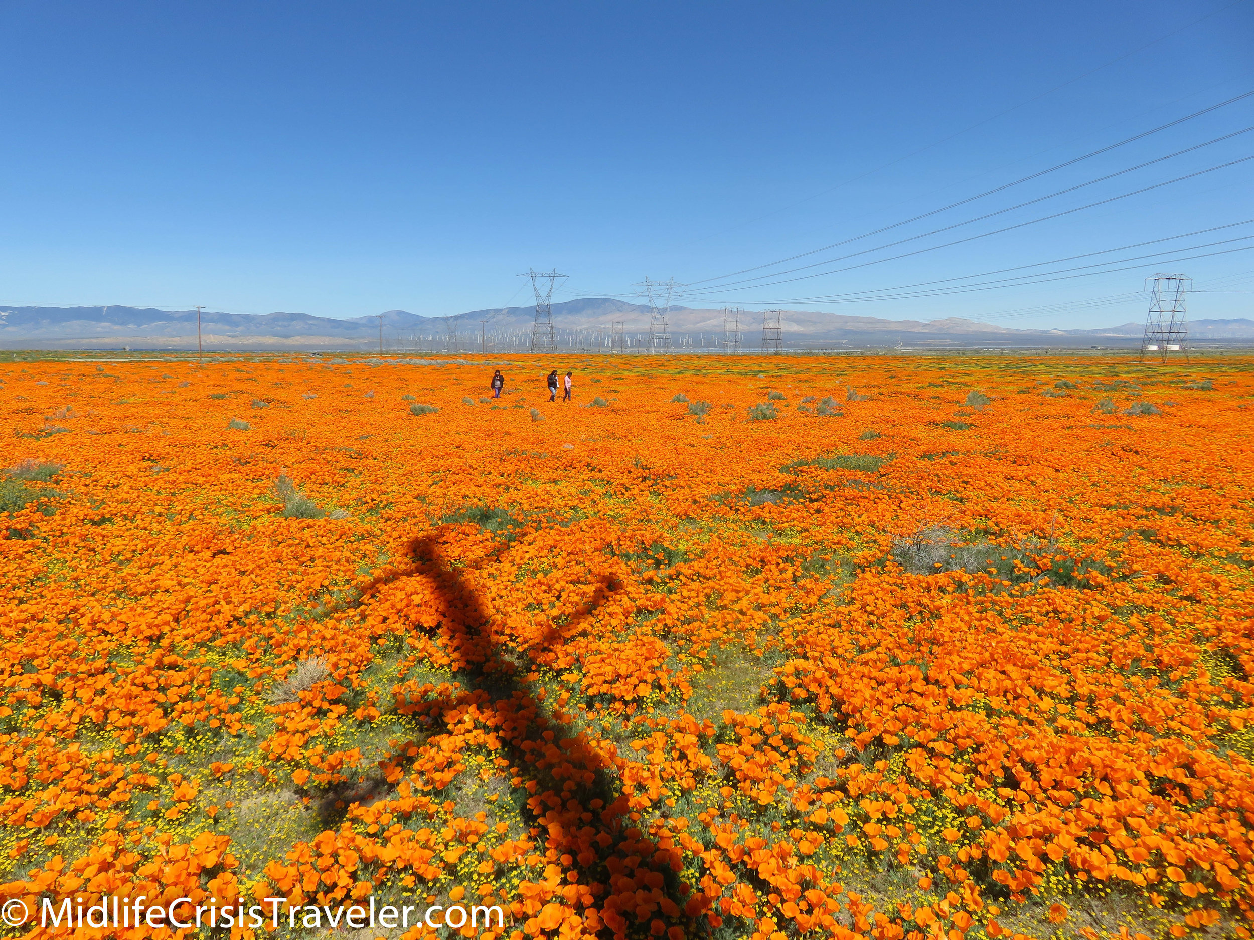 2019 Super Bloom-32.jpg