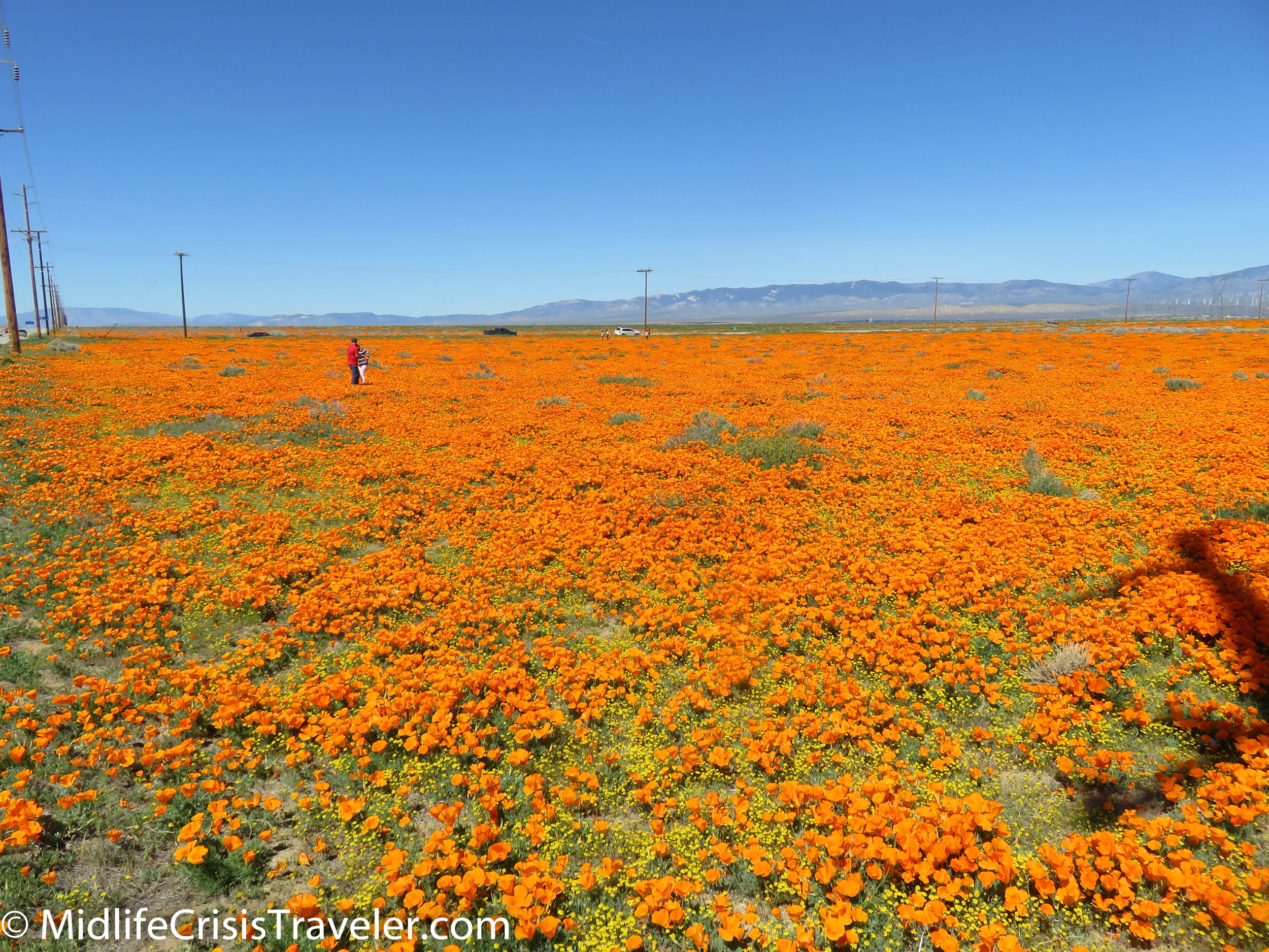 2019 Super Bloom-31.jpg