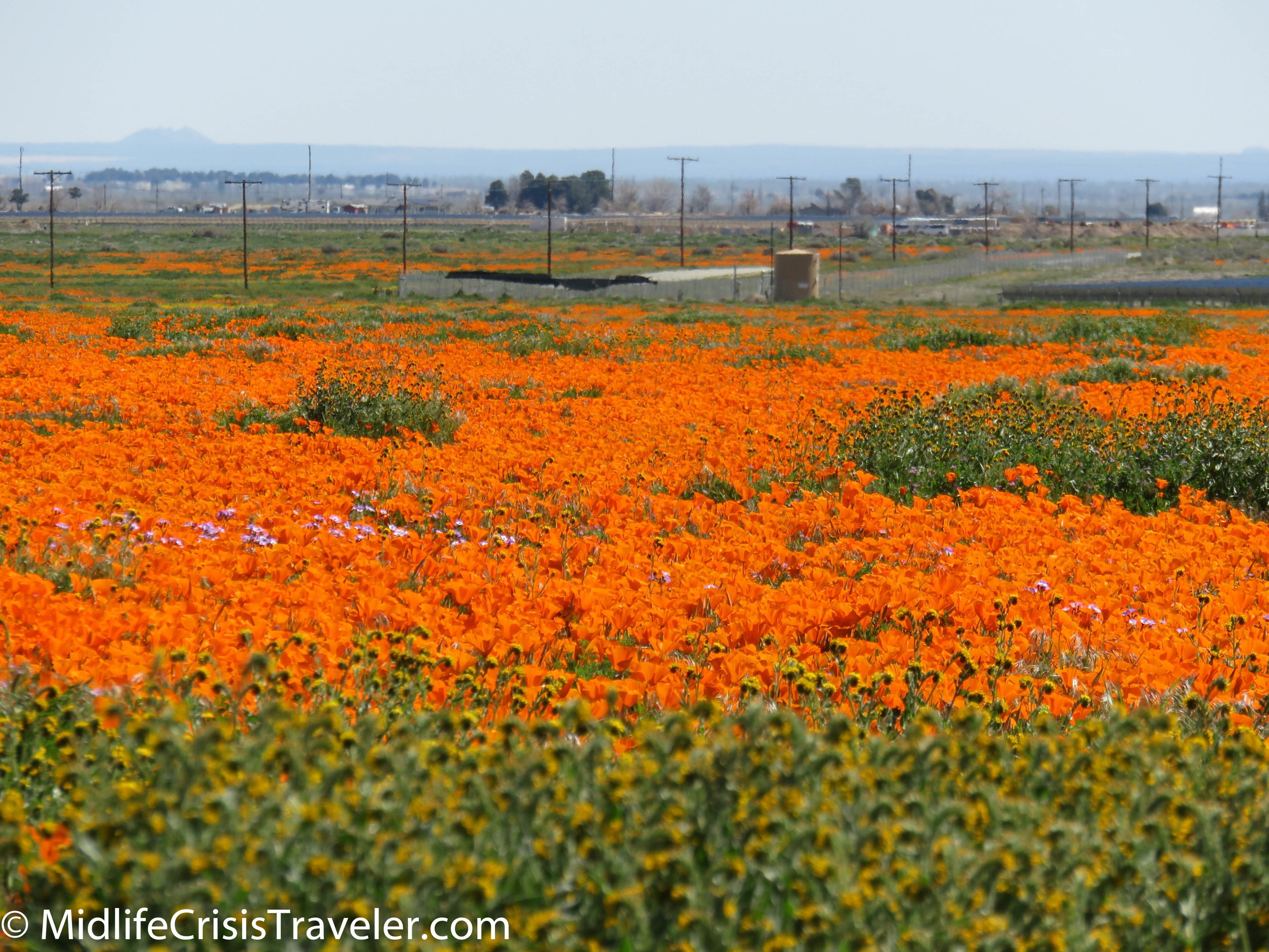 2019 Super Bloom-27.jpg