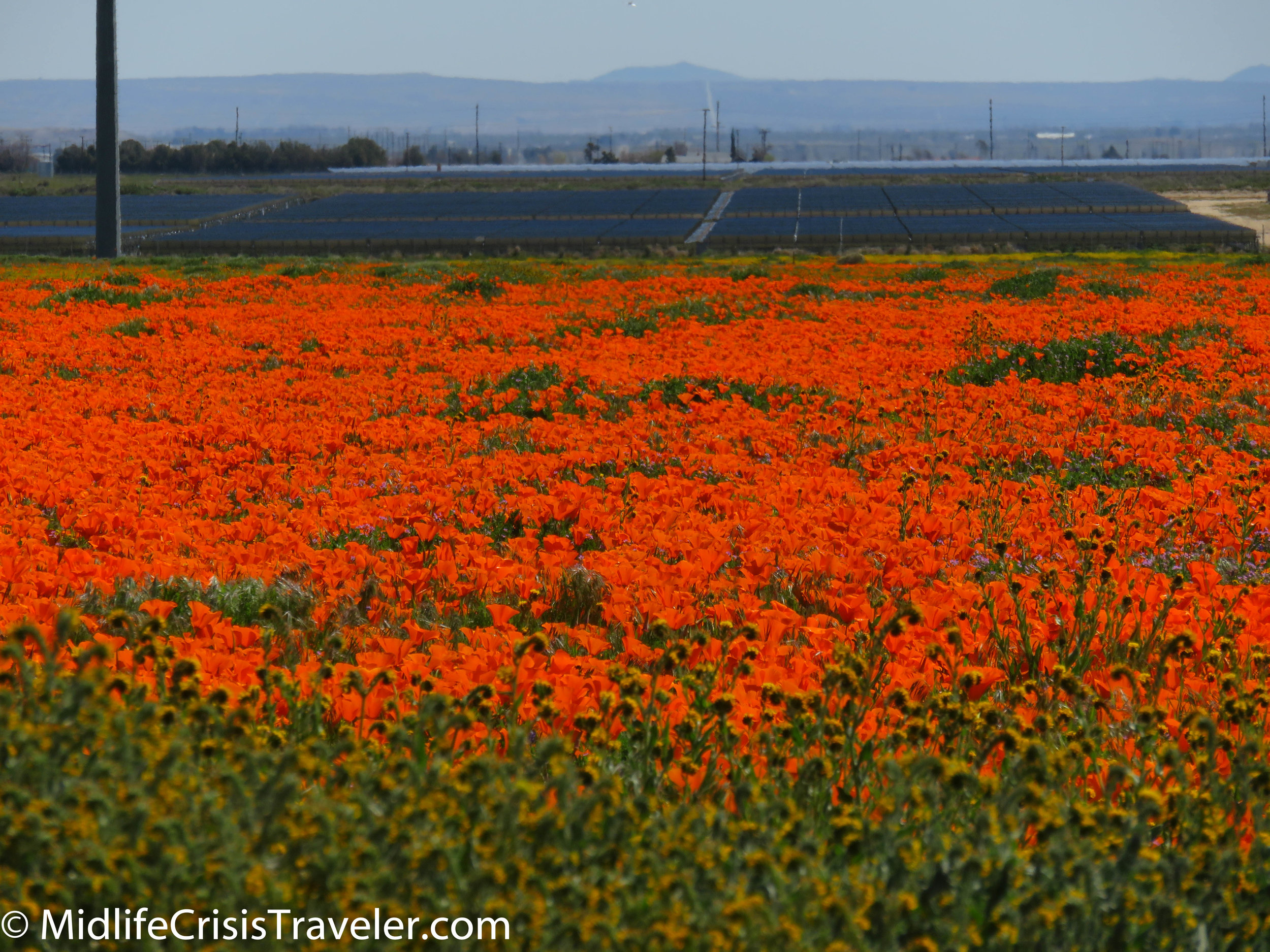 2019 Super Bloom-26.jpg