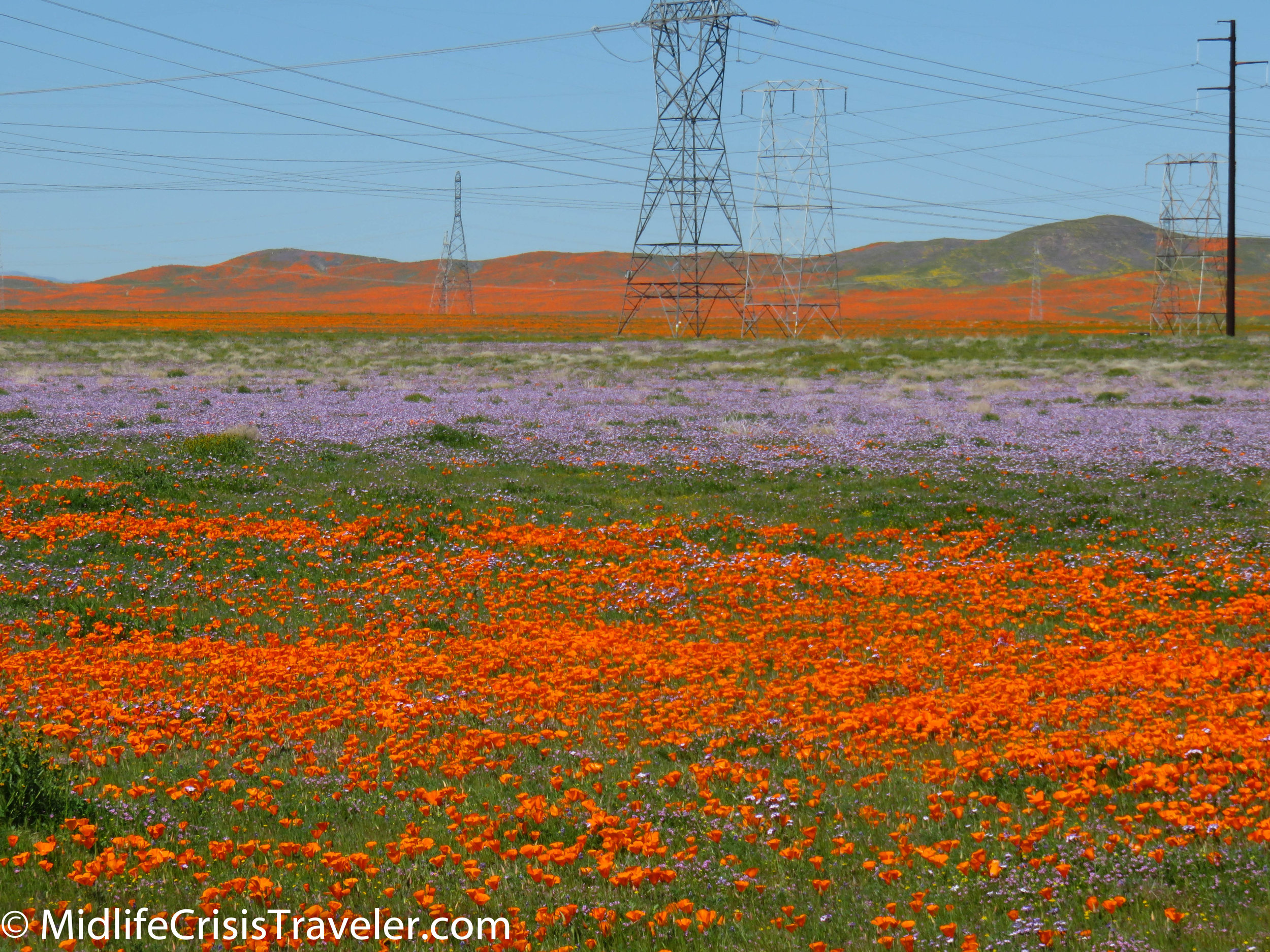 2019 Super Bloom-22.jpg