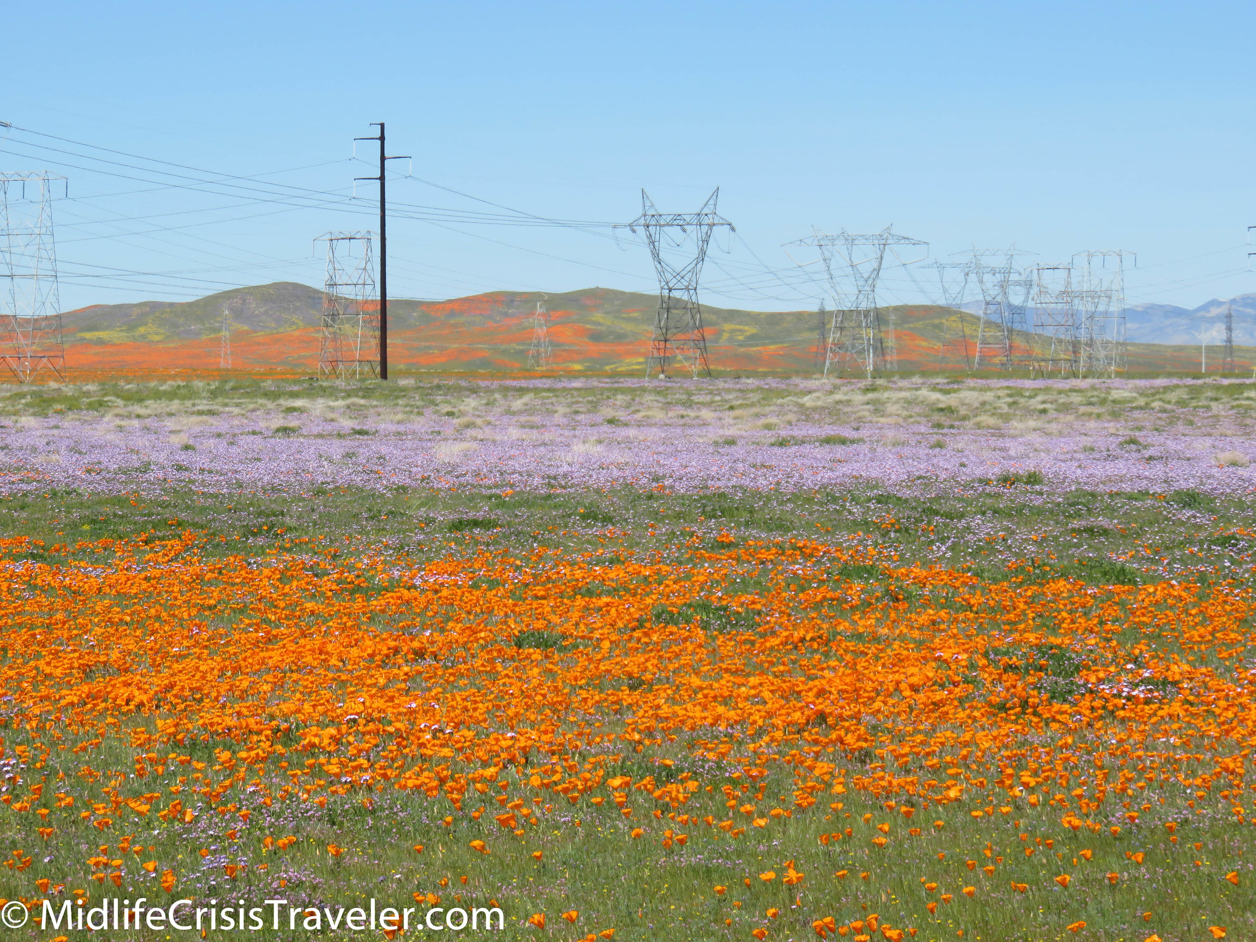 2019 Super Bloom-20.jpg