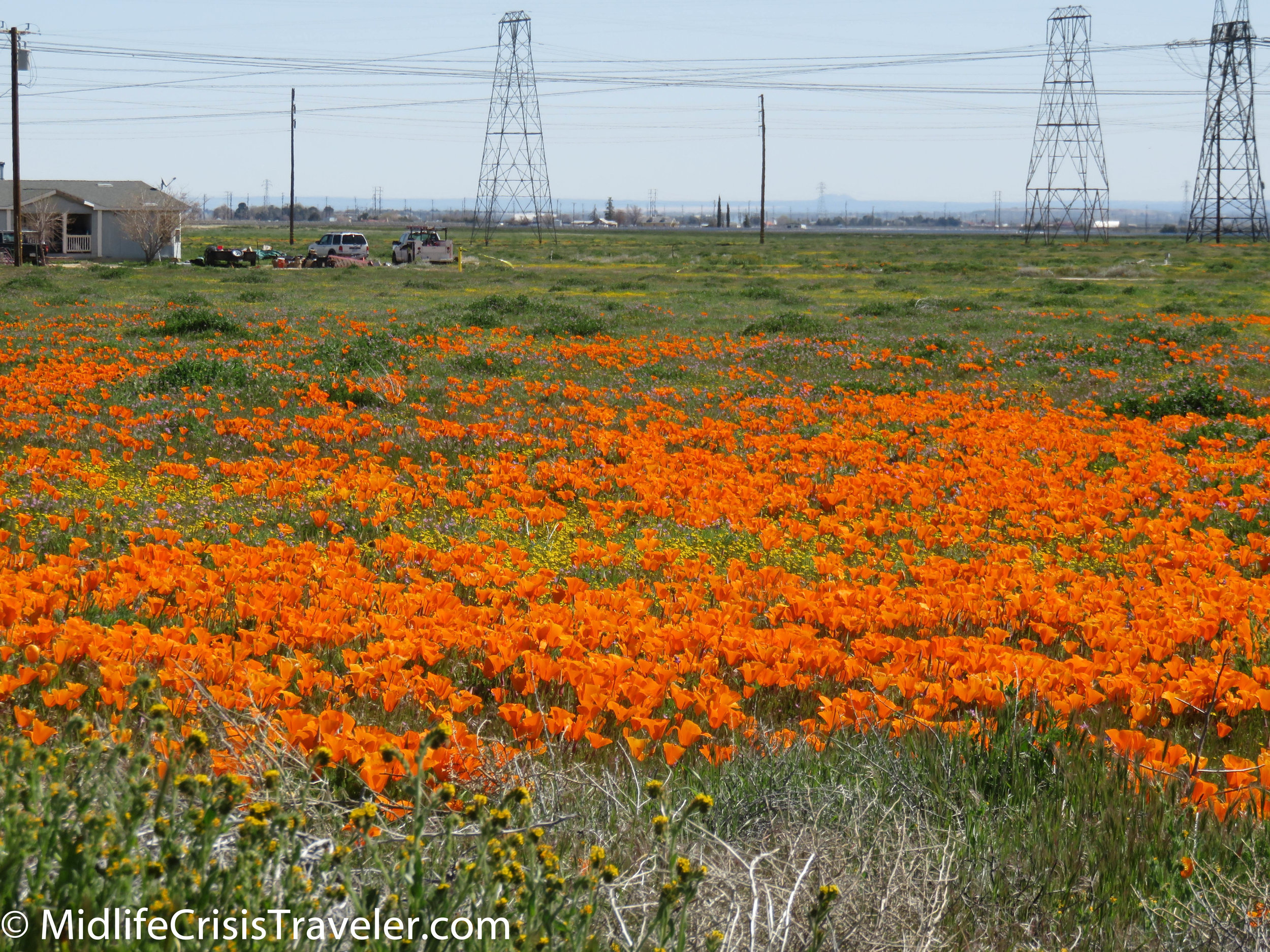 2019 Super Bloom-7.jpg