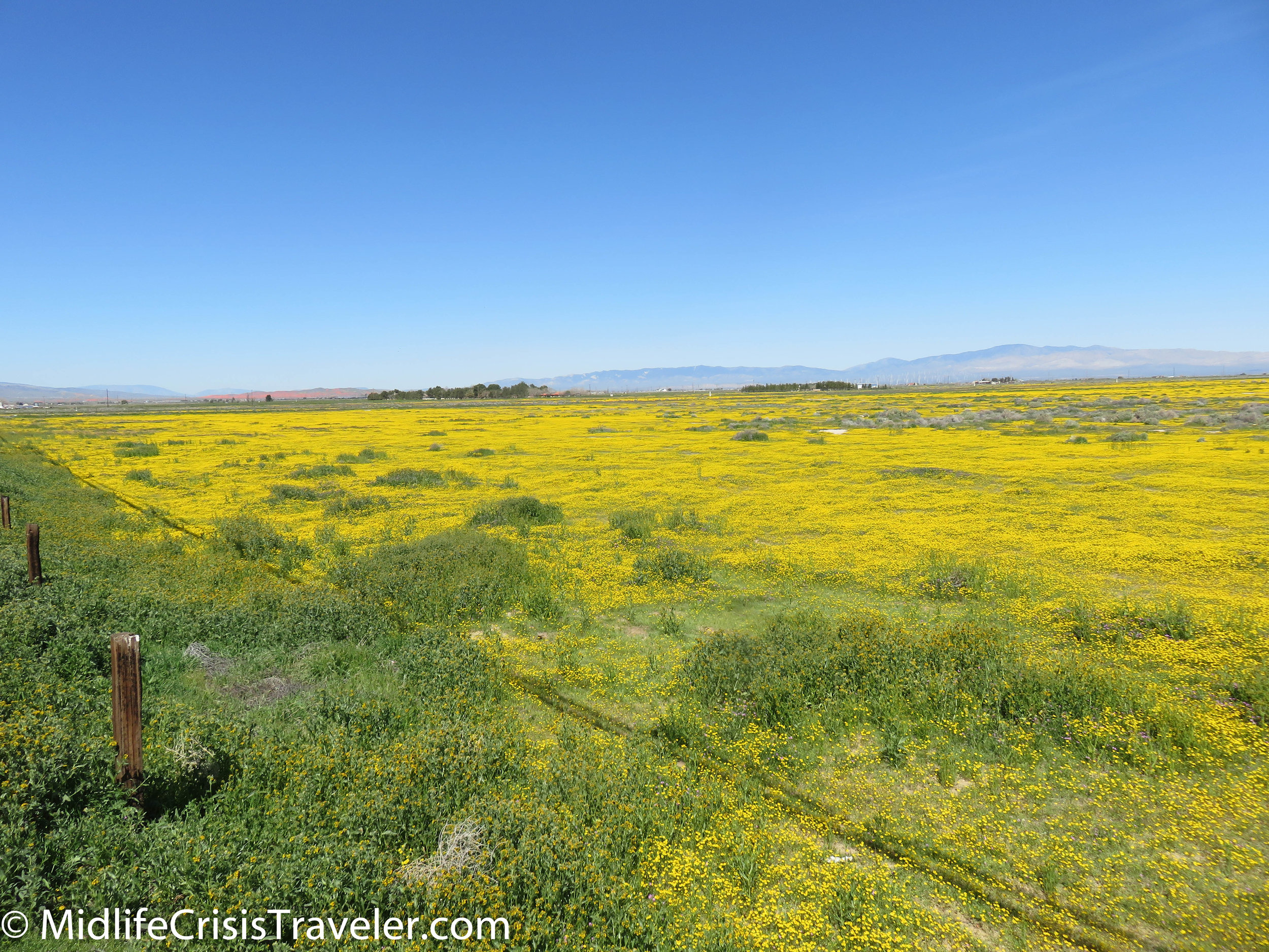 2019 Super Bloom-4.jpg