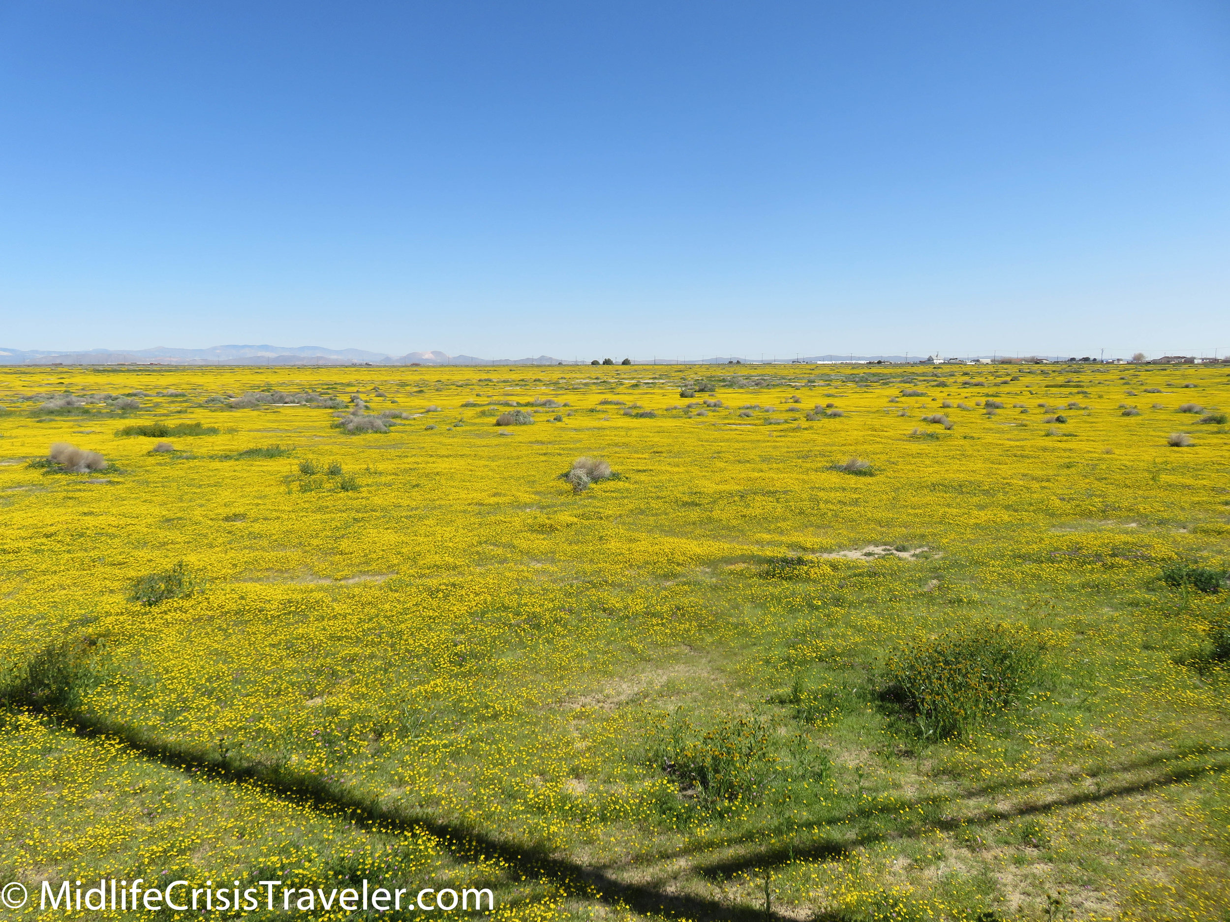 2019 Super Bloom-2.jpg