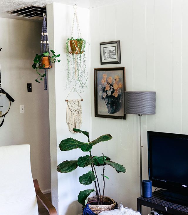 "My newest favorite corner of my apartment. I get asked often at markets where to hang a plant hanger, and the answer is literally anywhere. I have them hanging in my kitchen window and in the corner of my living room to give some life to the place!! Just as long as there is light, I think that's all that matters. Does anyone else ""curate"" a corner of your house but you use up all the good decorations and then the rest of place needs a re-do??? #olivebloom #olivebloommacrame #olivebloomworkshop . . . . . #macrame #fiberartist  #modernmacrame #modernmaker #makersgonnamake #macramemovement #handsandhustle #creativehappylife #leaf_ladies #macramelove #howiboho #darlingmovement #pursuepretty #macramemaker #bohemian  #plantlady #macramewreath #macrameplanthanger #pothos #macrameworkshop #planthangerworkshop #planthanger #cachevalleyutah #cachevalley #thecraftivistatl #loganutah #planthangerworkshop"