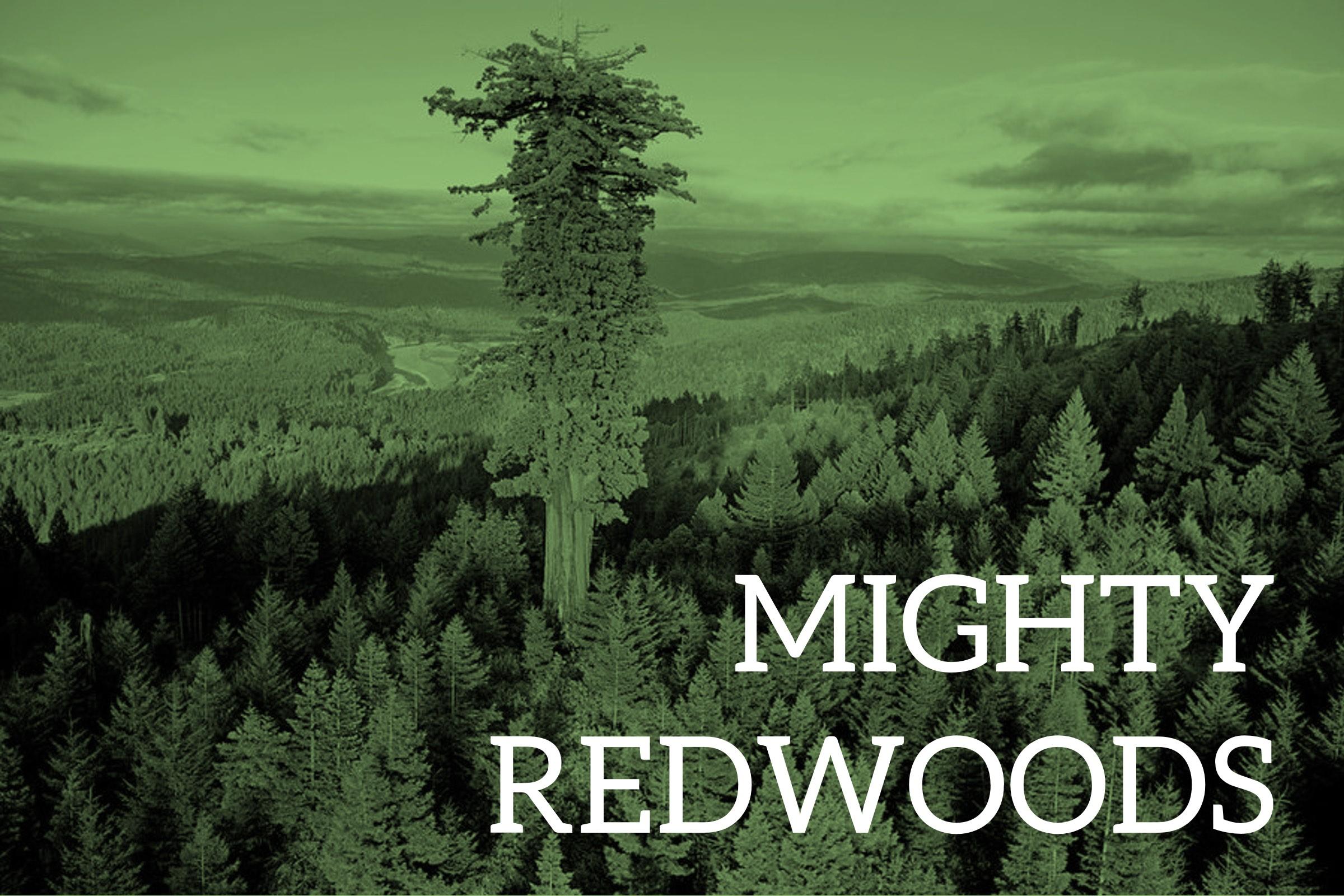 Mighty Redwoods Web_small.jpg