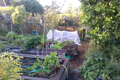 Tricia Thompsons Garden 2.jpg