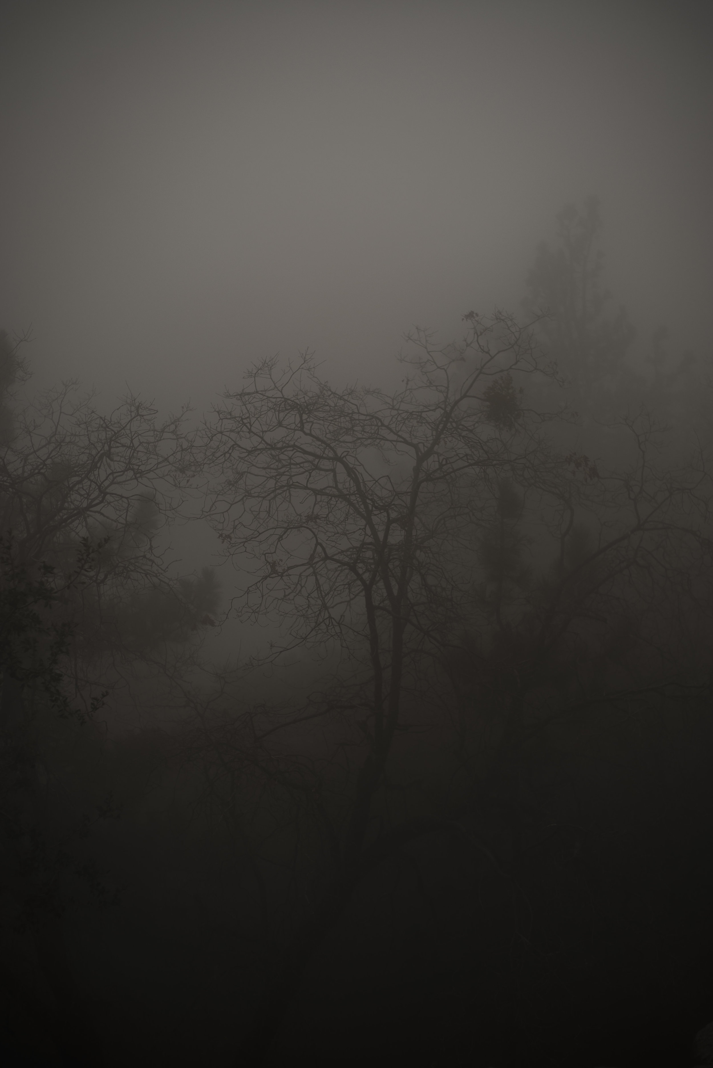 The myst hangs heavy on the mountain sometimes.