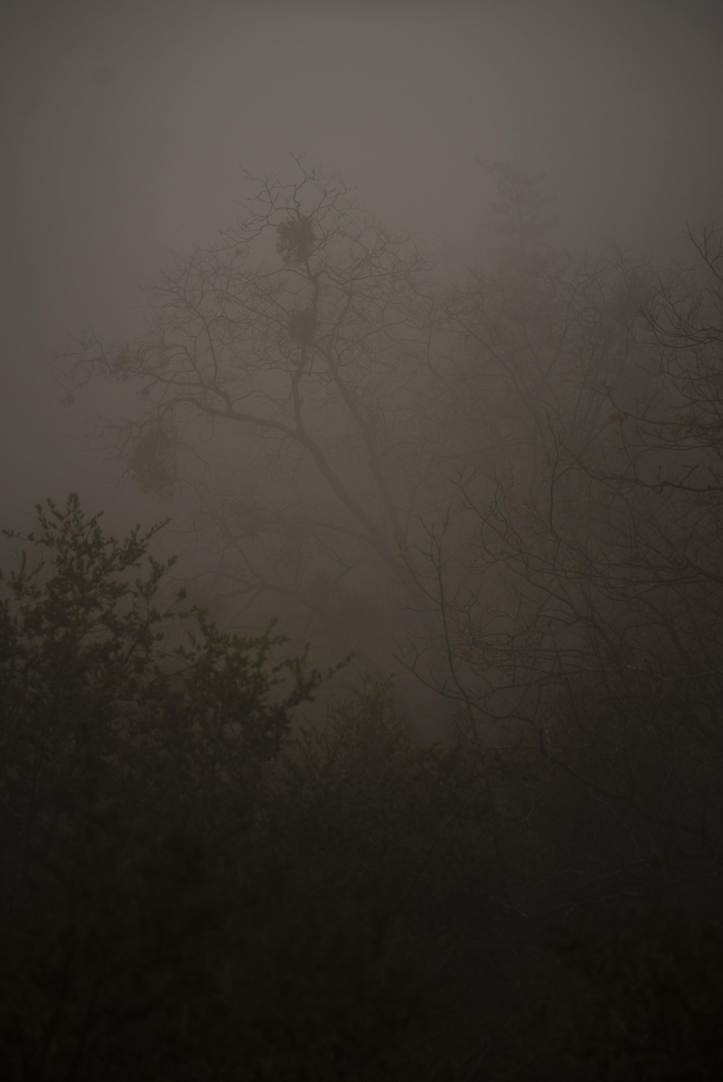 More Spooky Fog!