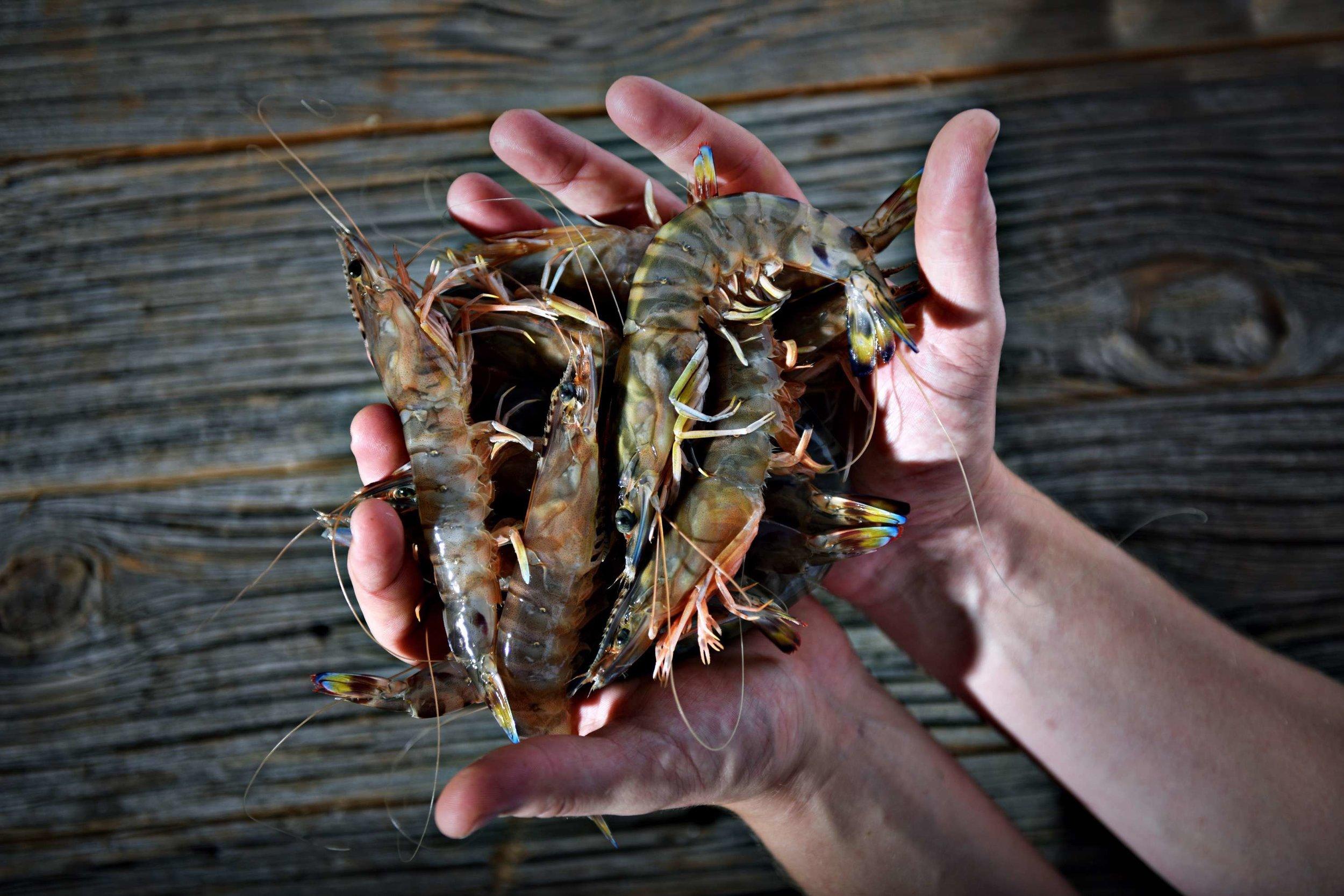 12 dome sur mer seafood schaal schelp kreeft restaurant bistro antwerpen frederic chabbert michelinstar bart albrecht tablefever.jpg