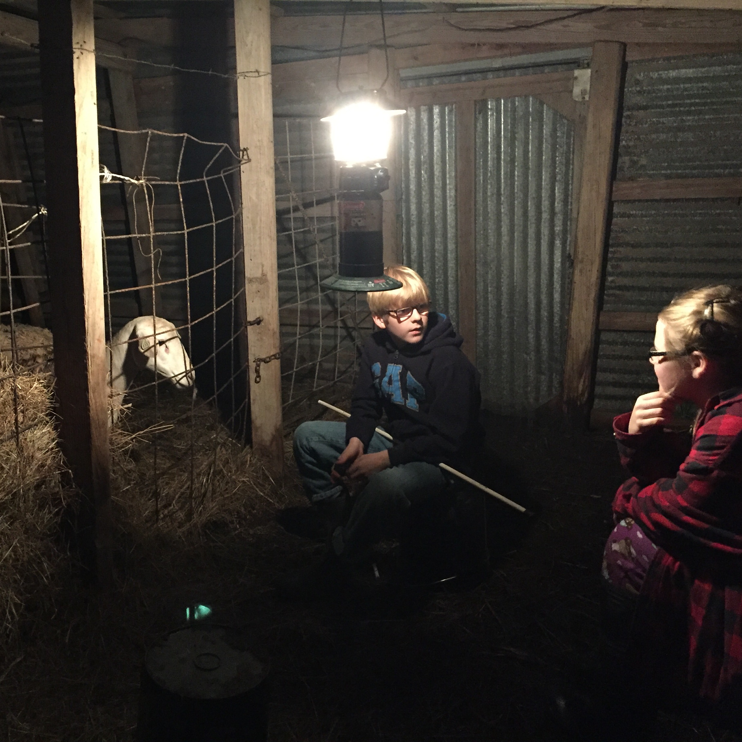 Taken two days before Christmas in 2015.  Late in the cold dark night my kids are waiting for a lamb to be born and assist the ewe if needed.  This is where grit is nurtured. But whose grit is being formed?