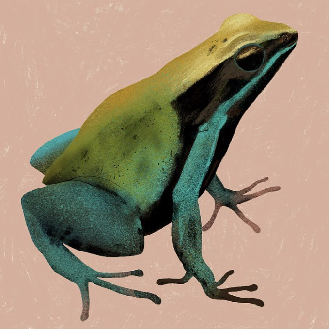 GreenMantella.jpg