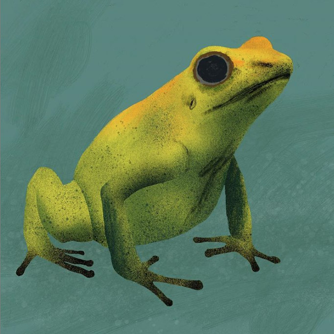 PoisonFrog.jpg