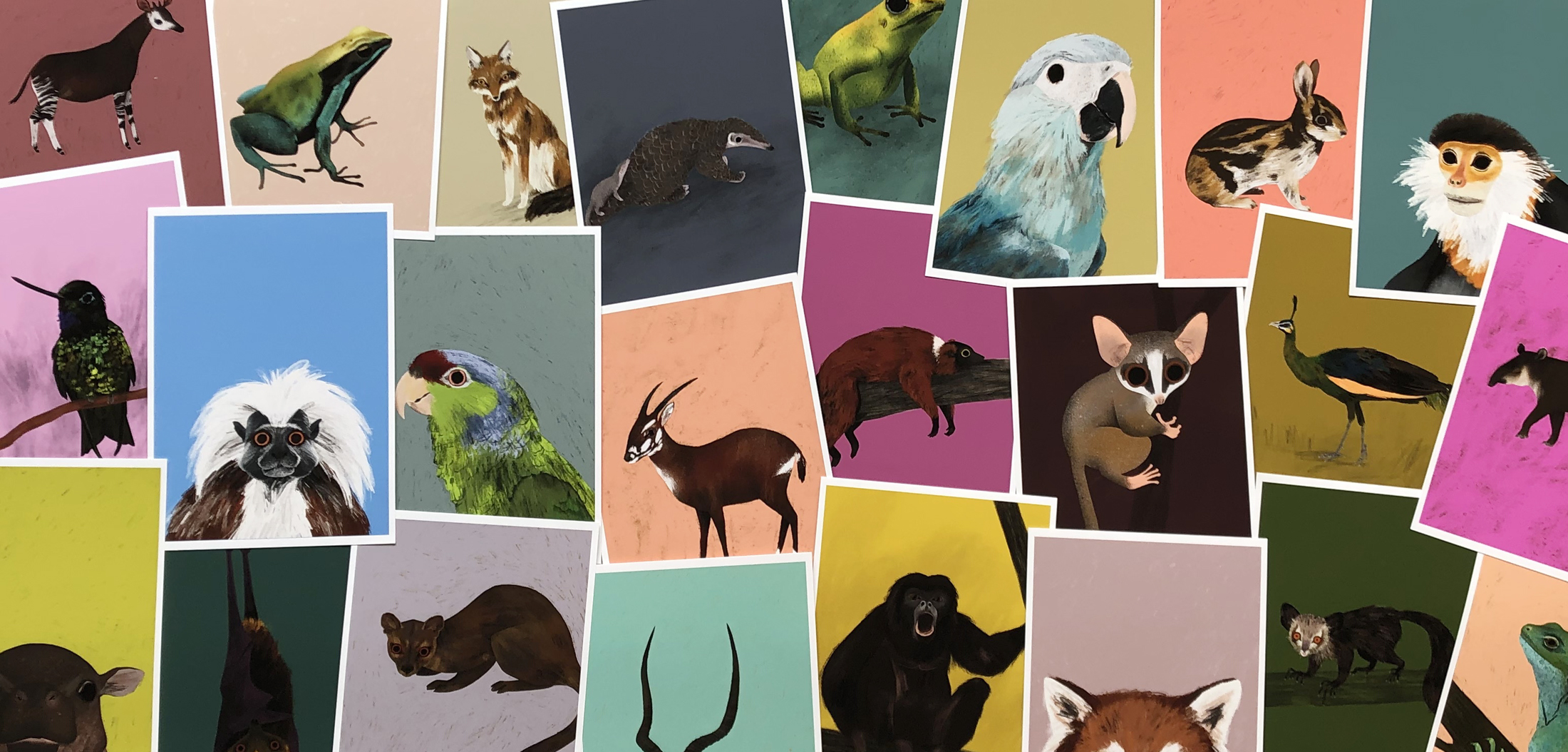 Abigail brownxrainforest trust - Endangered Animals Collaboration